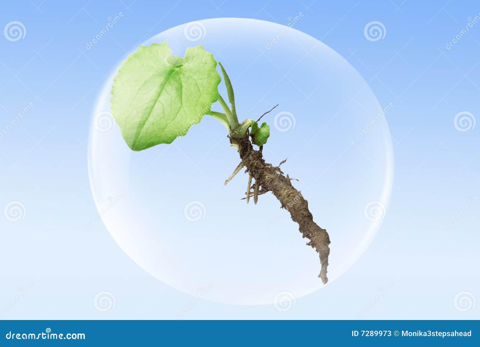 Planta en una burbuja