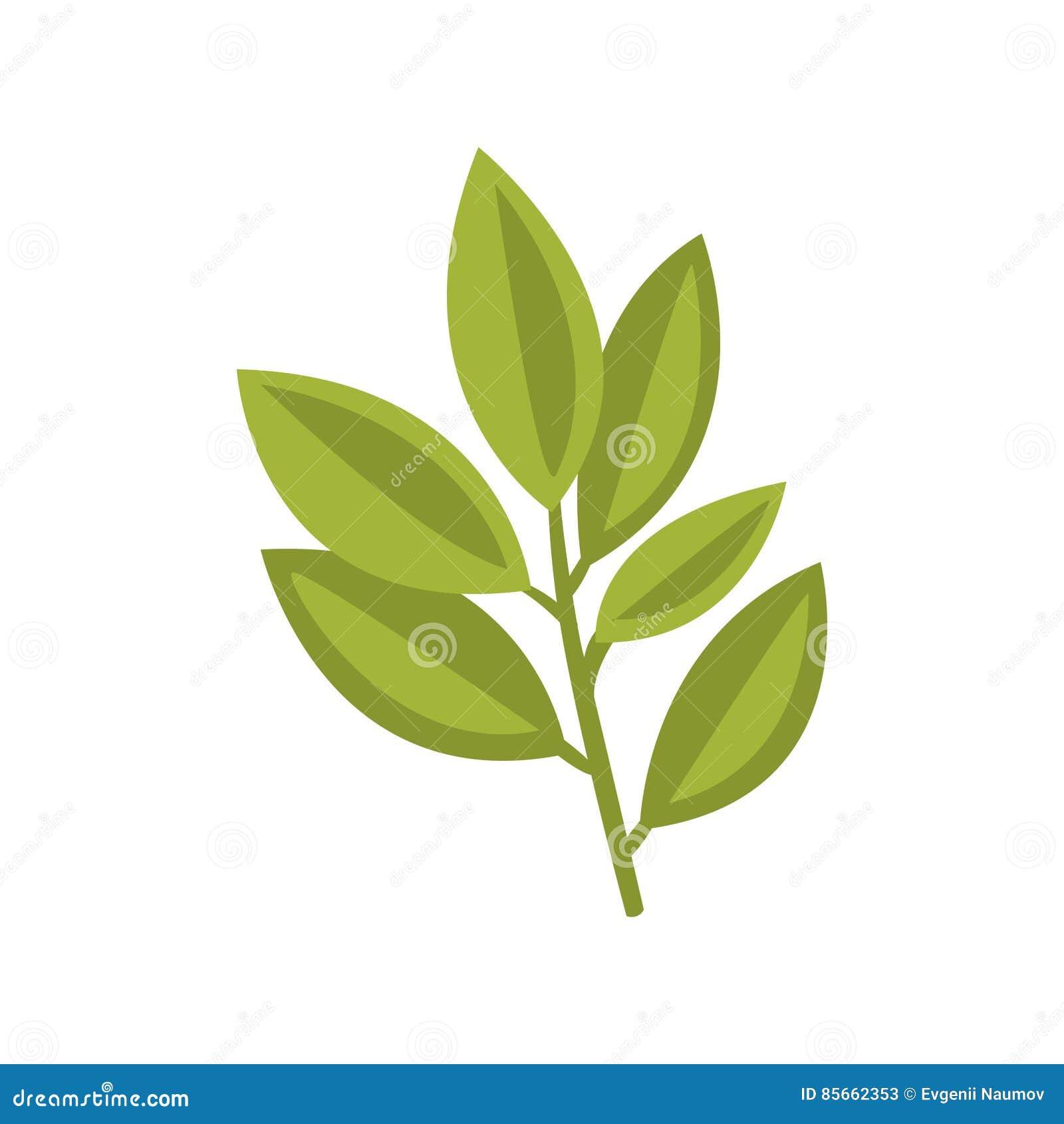 Planta fresca Herb Primitive Cartoon Icon, parte de Basol de serie del café de la pizza de ejemplos de Clipart