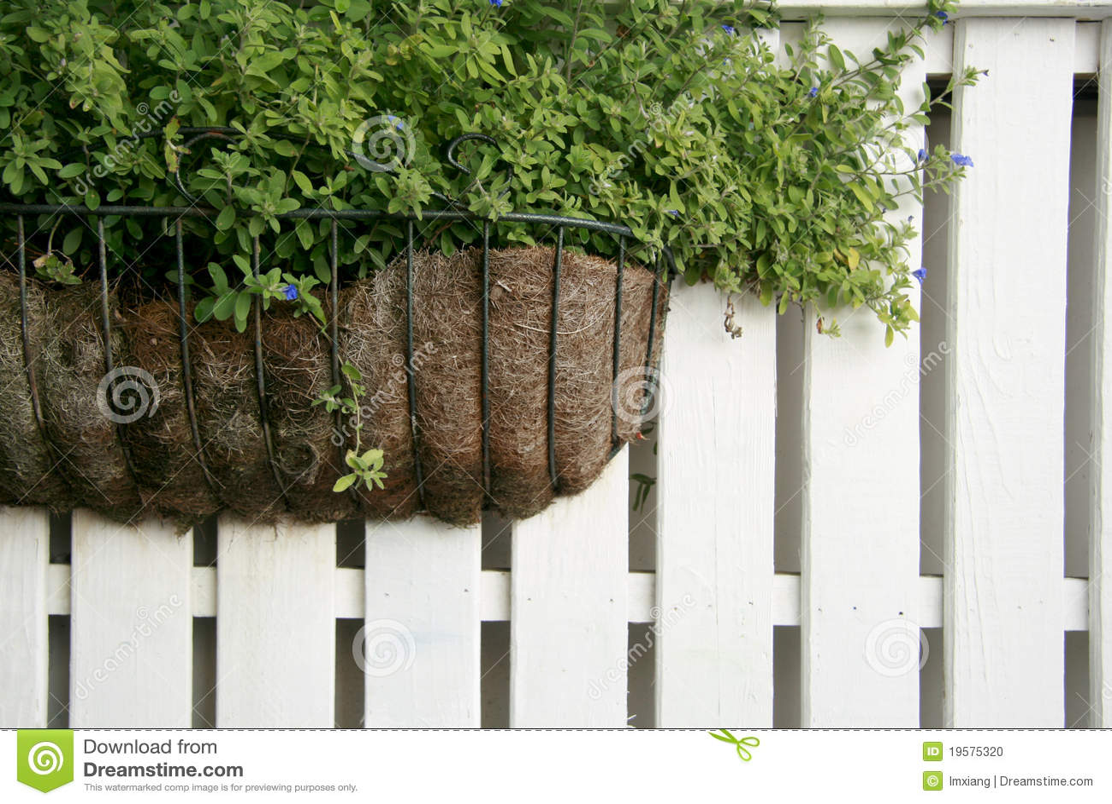 cerca para jardim branca : cerca para jardim branca:Planta Na Cerca De Madeira Branca Foto de Stock – Imagem: 19575320