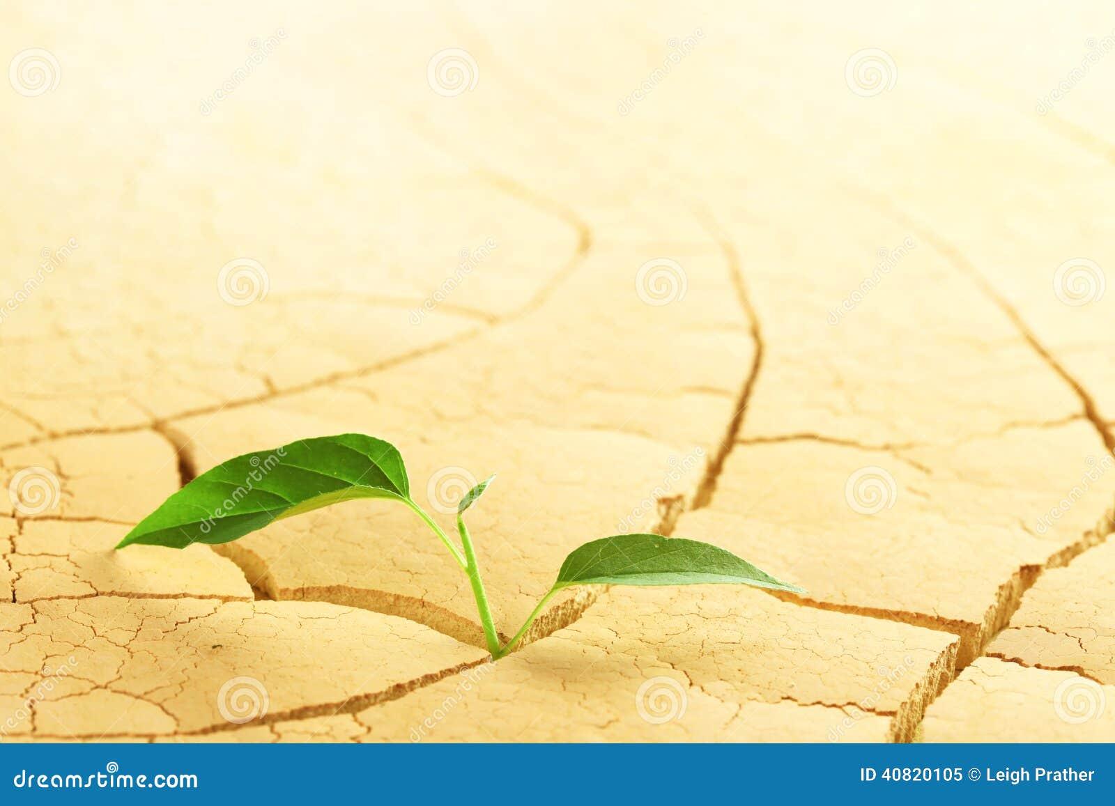 planta no deserto foto de stock