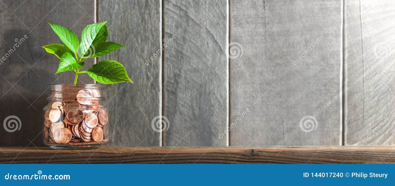 Planta nova que cresce fora do frasco da moeda na prateleira com fundo e luz solar de madeira - crescimento financeiro/que invest