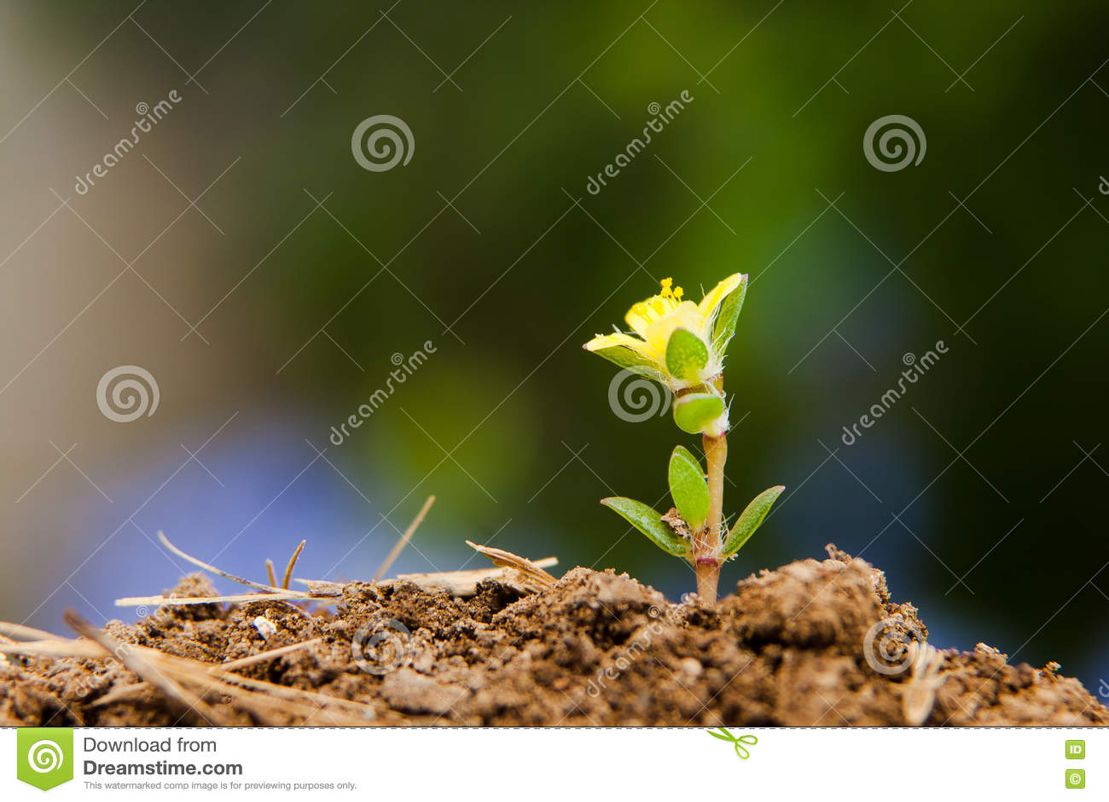 Planta pequena que cresce após a primavera