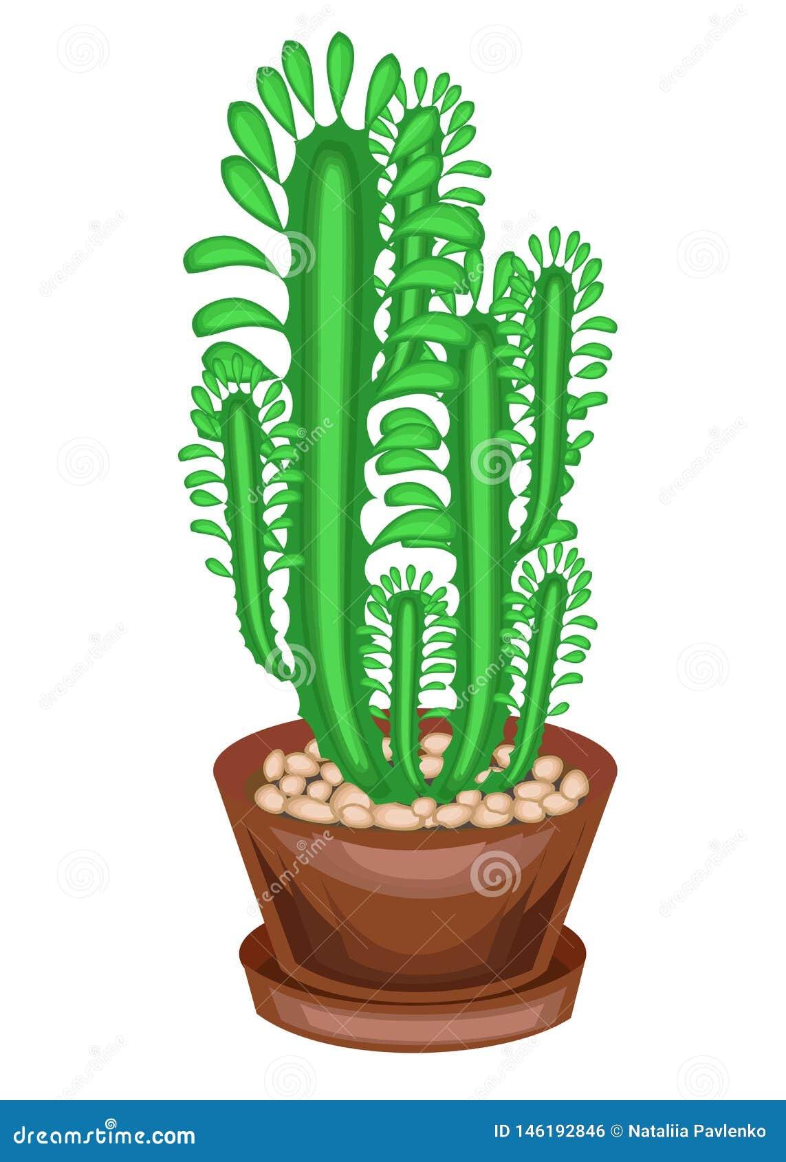 Planta Potted em um potenci?metro Alguns verdes dos ramos de uma planta carnuda, um cacto Hastes verticais altas com facetas e es