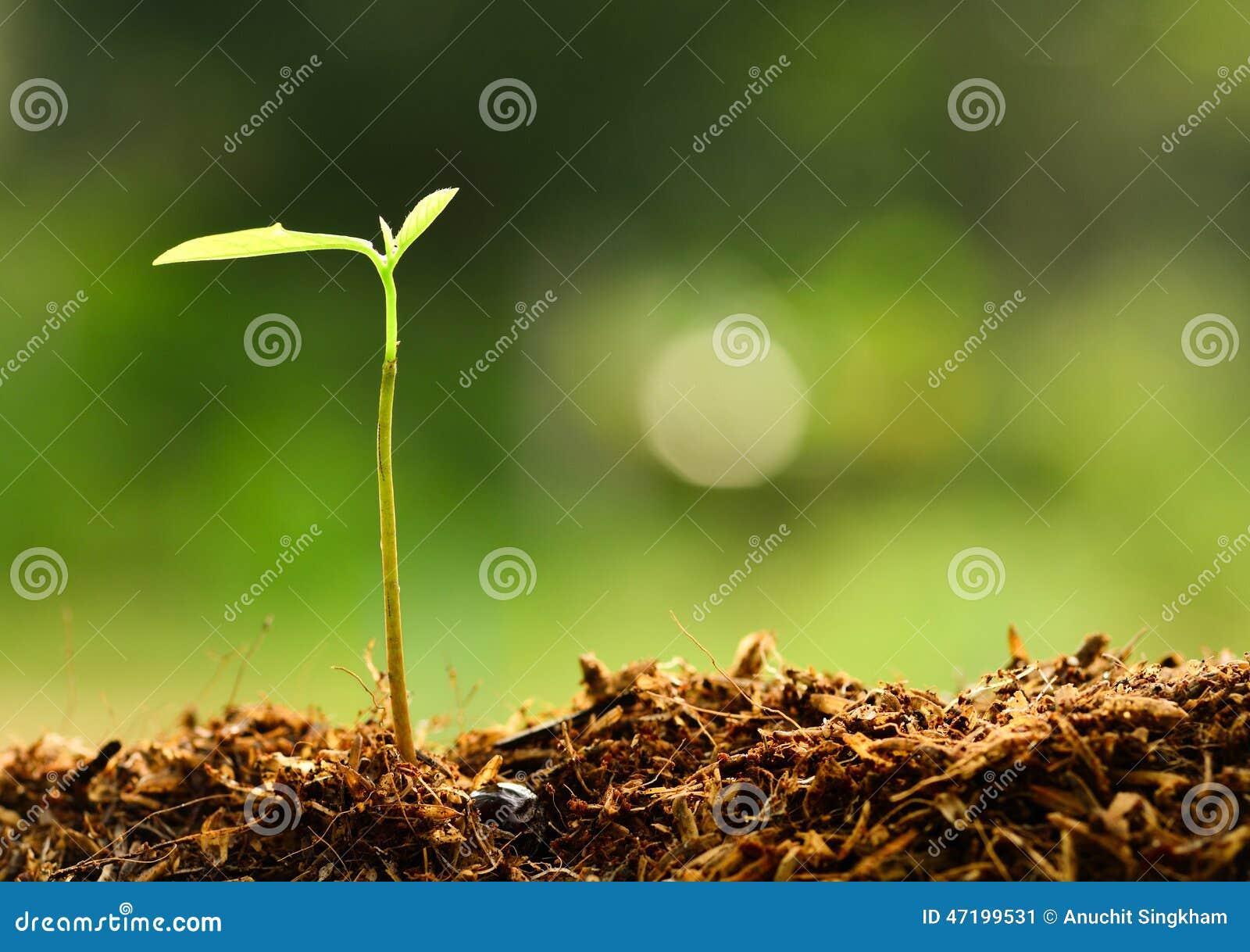 Planta que crece sobre el ambiente verde