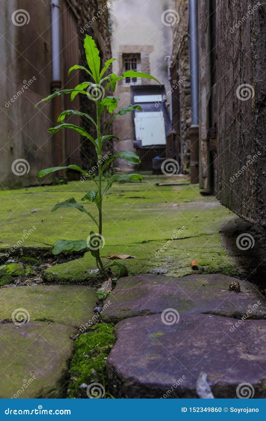Planta que cresce na terra