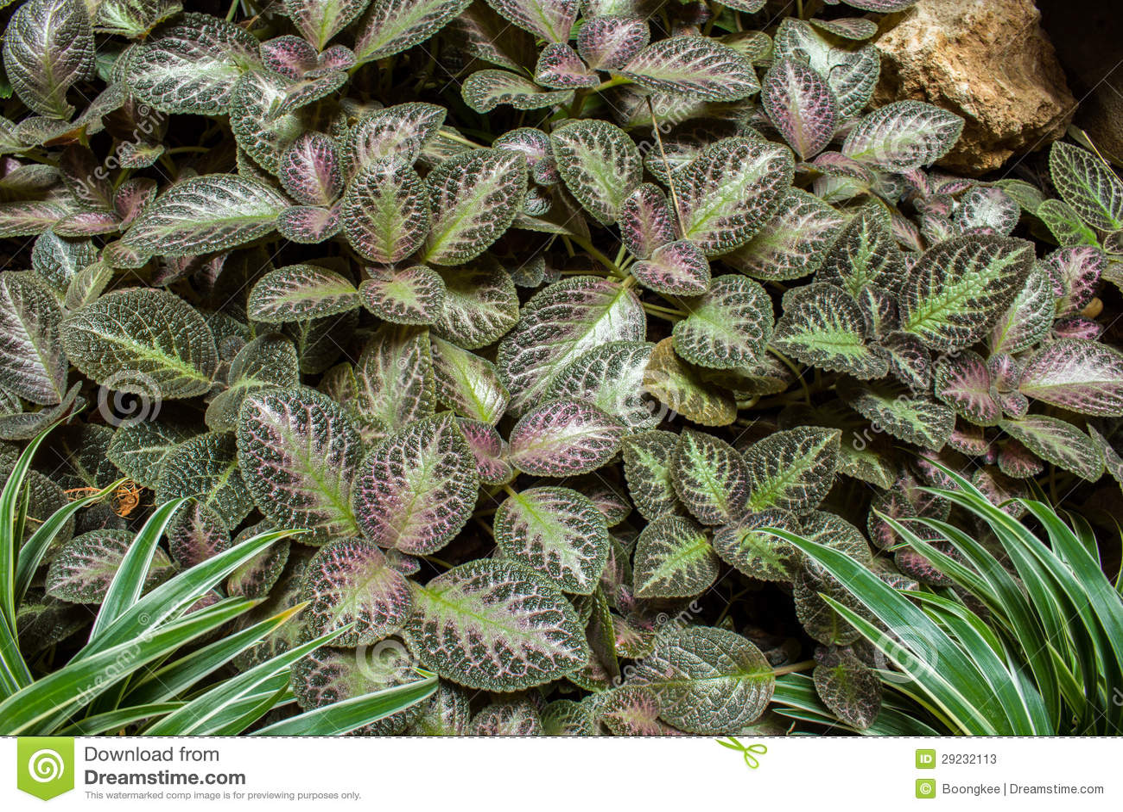 Download Planta se jardim imagem de stock. Imagem de frio, vegetação - 29232113