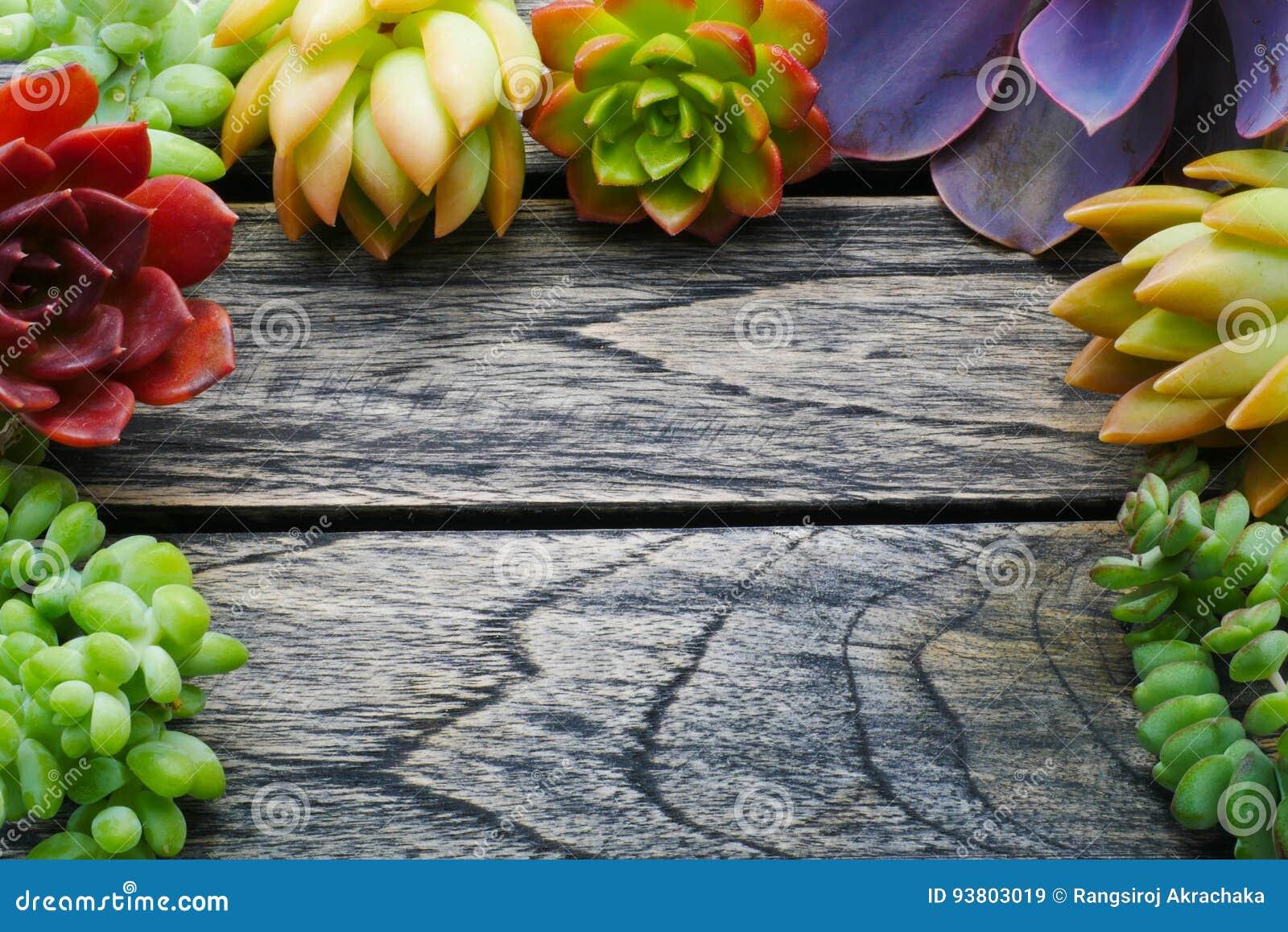 Planta suculenta colorida linda de la visión superior con el espacio de la copia para el texto en fondo de madera de la tabla