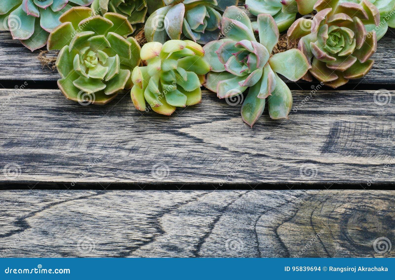 Planta suculenta de la visión superior en fondo de madera