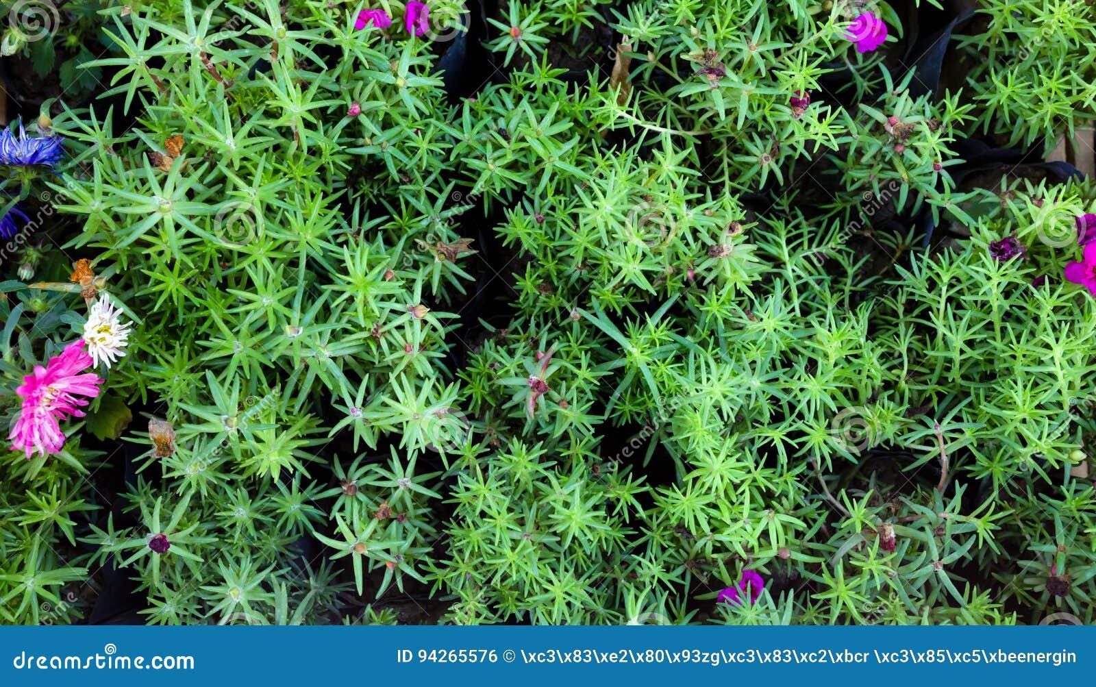 Planta Suculenta Flores Fondo Foto De Archivo Imagen De Belleza