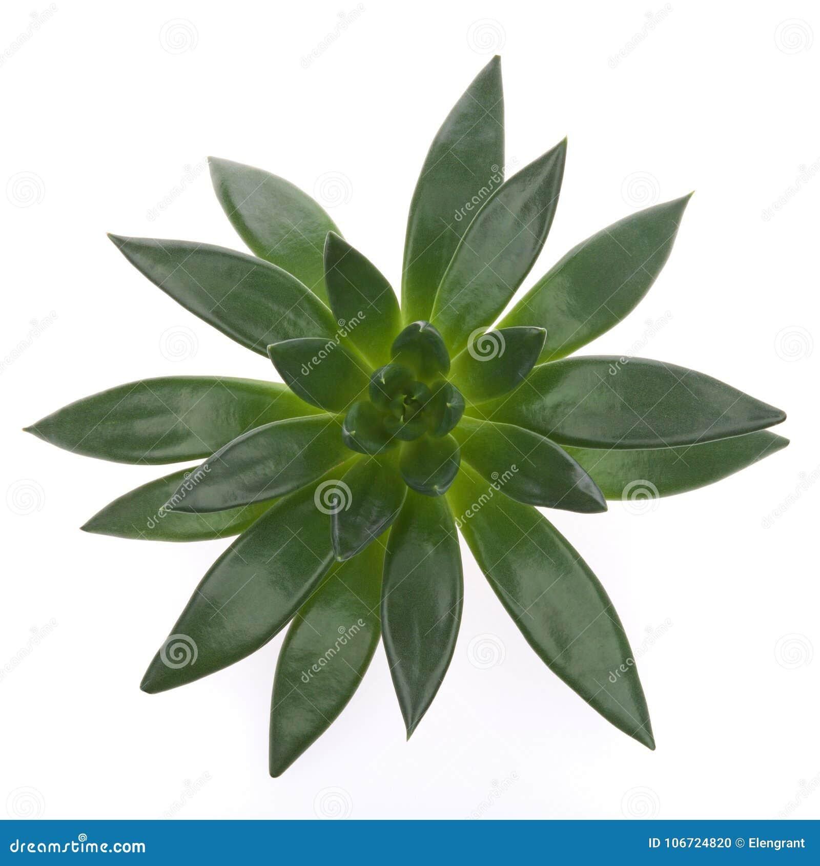 Planta Suculenta Verde Oscuro Houseplant Marco Cuadrado Foto de ...
