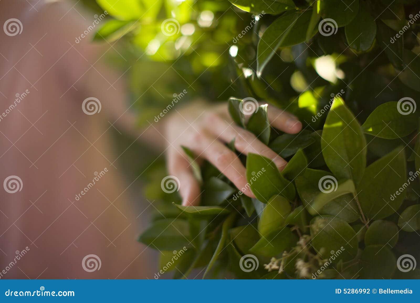 Planta tocante da mulher