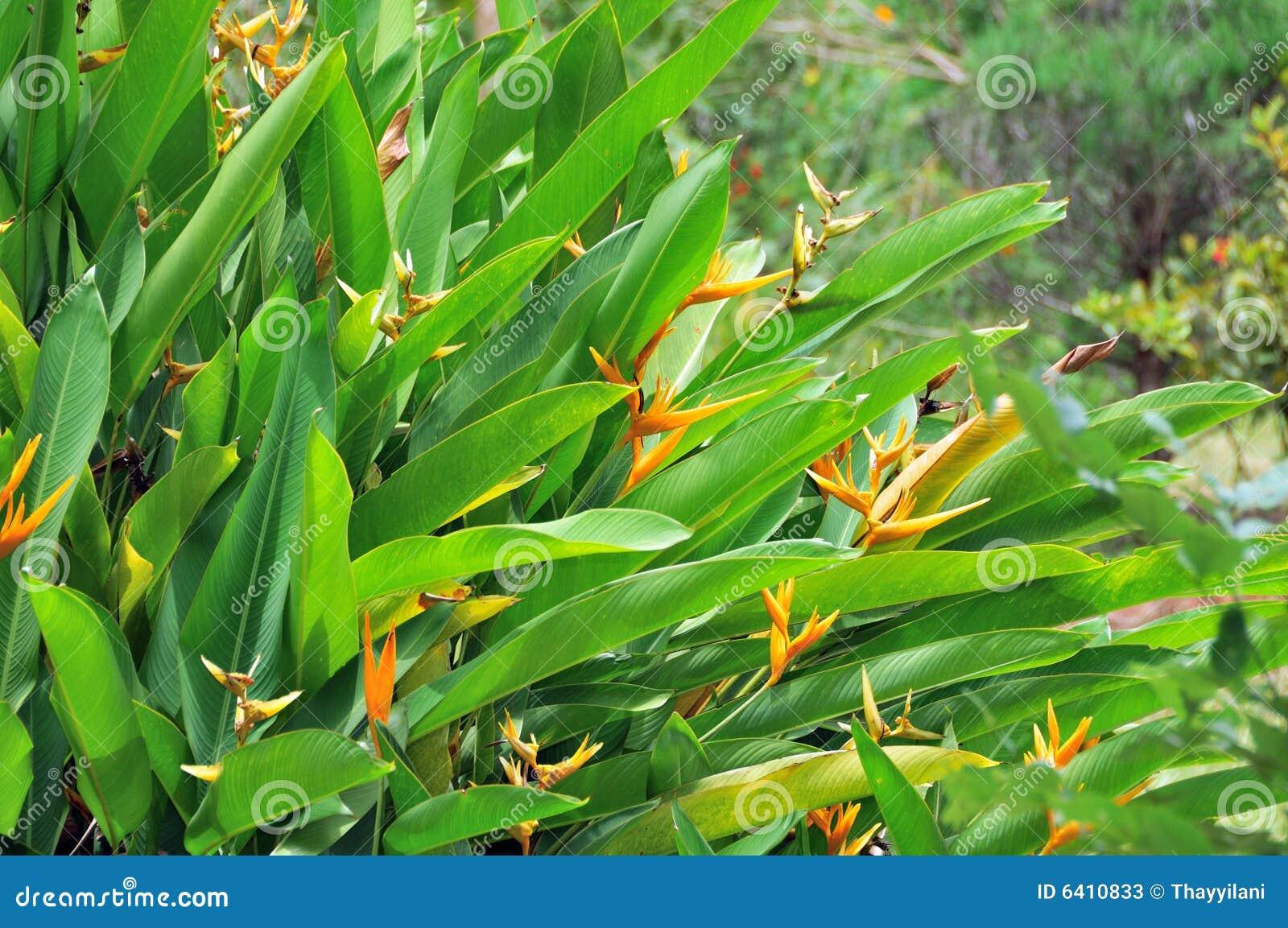 plantas jardim tropical:Exotic Tropical Plants
