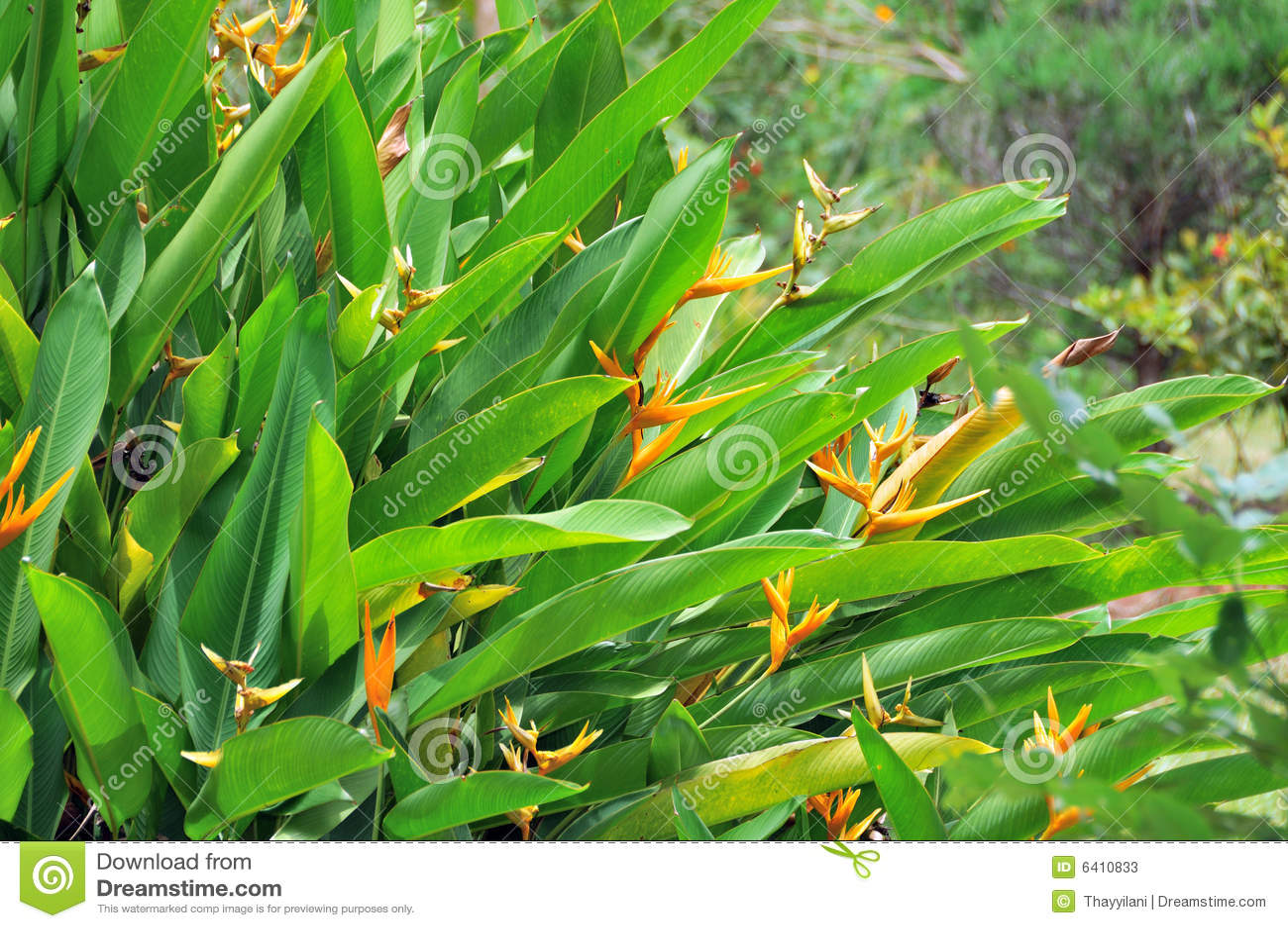 imagens de jardim tropicalExotic Tropical Plants