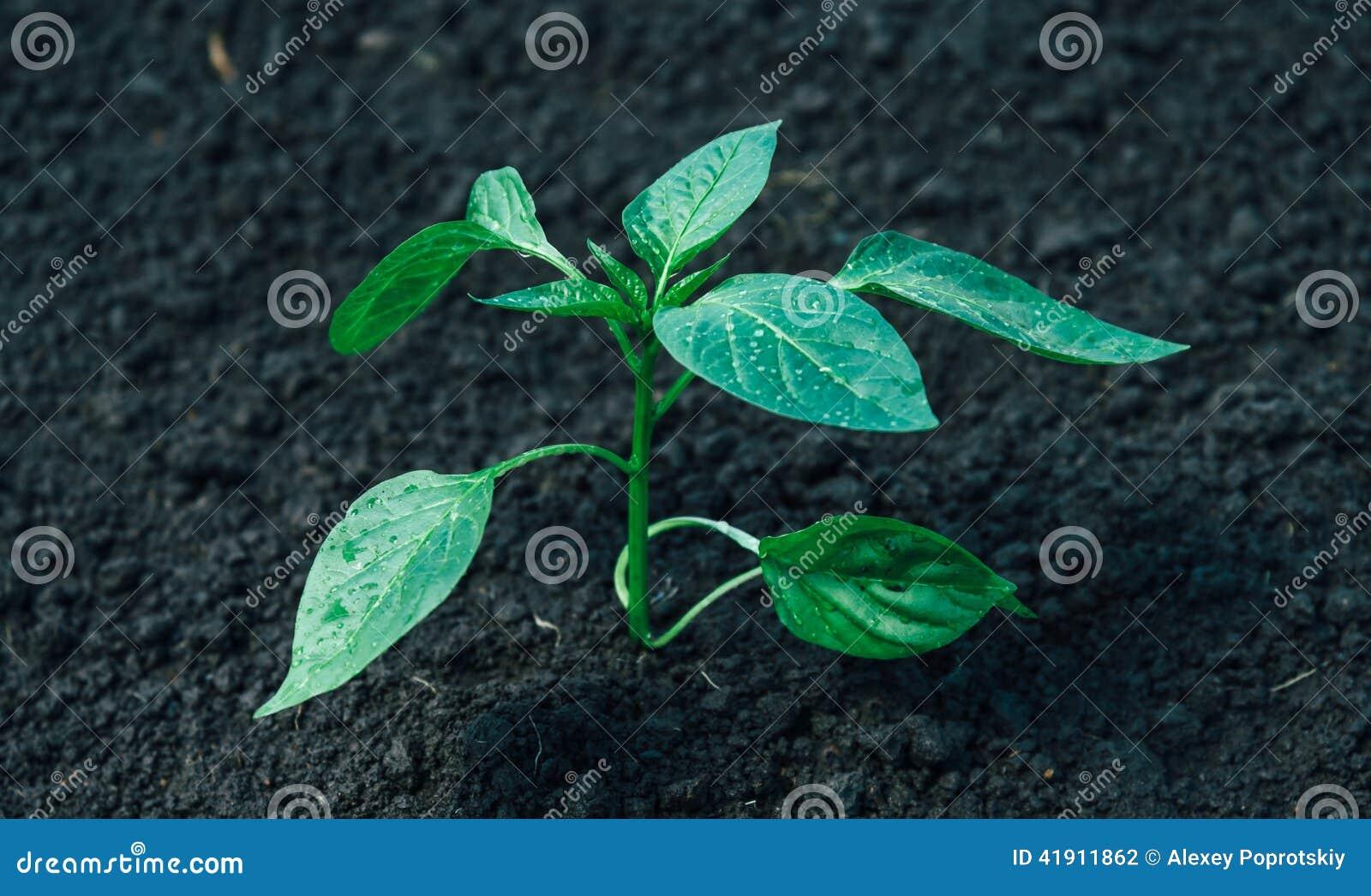 Planta verde cultivada
