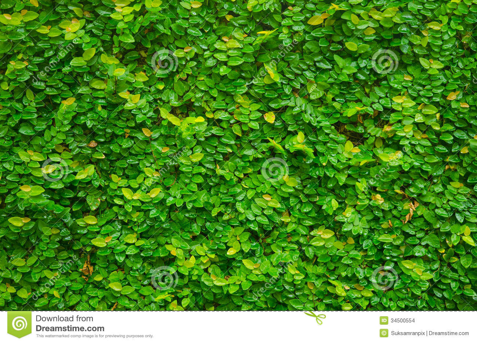 Planta verde de la enredadera en la pared para el fondo for Plantas en la pared