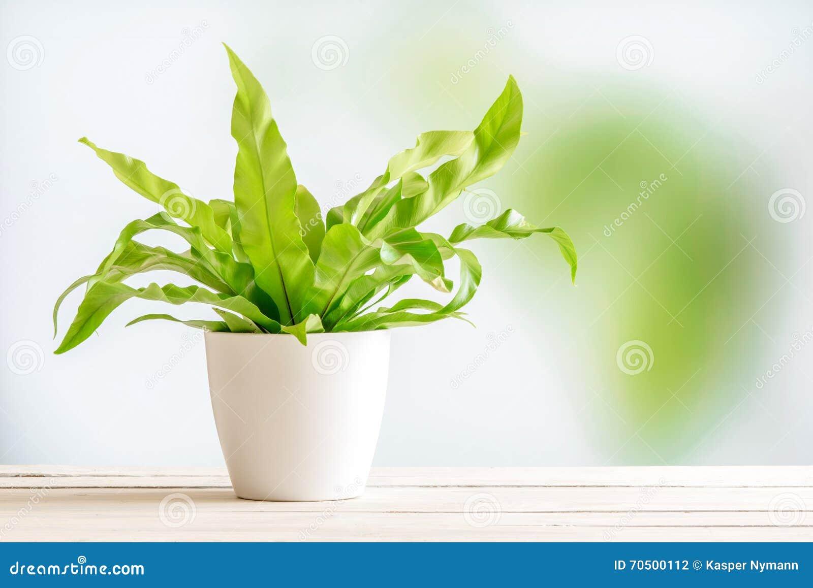 Planta verde en una maceta blanca foto de archivo imagen for Varias plantas en una maceta