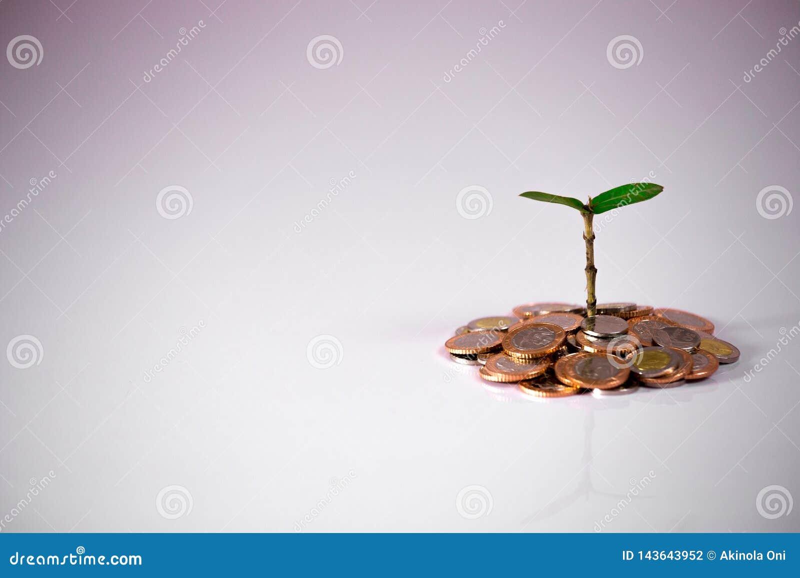 Planta verde nas moedas que mostram o crescimento financeiro