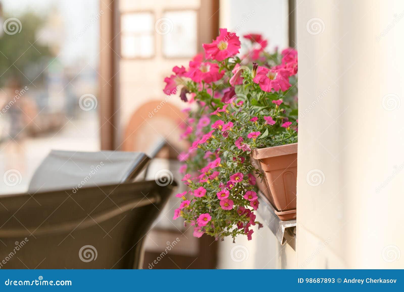 Planta vermelha na soleira exterior no caf caf europeu - Plantas verdes exterior ...