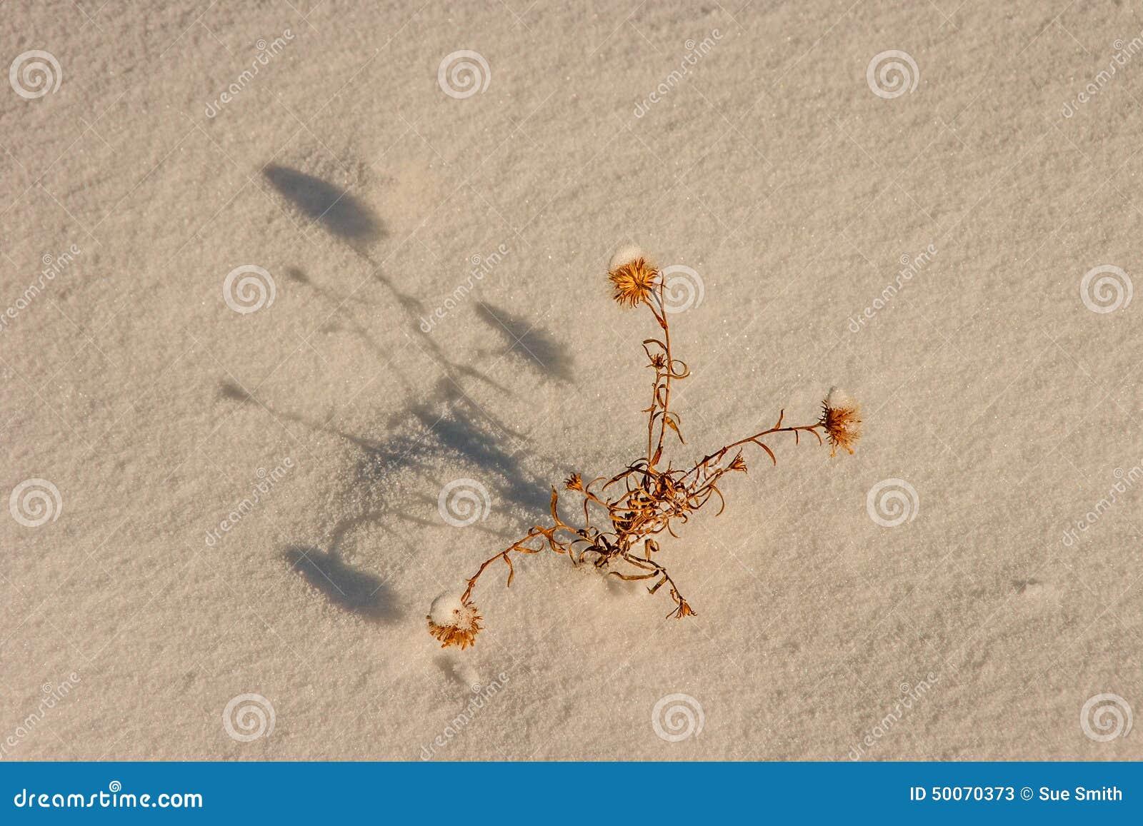 Planta y sombra muertas