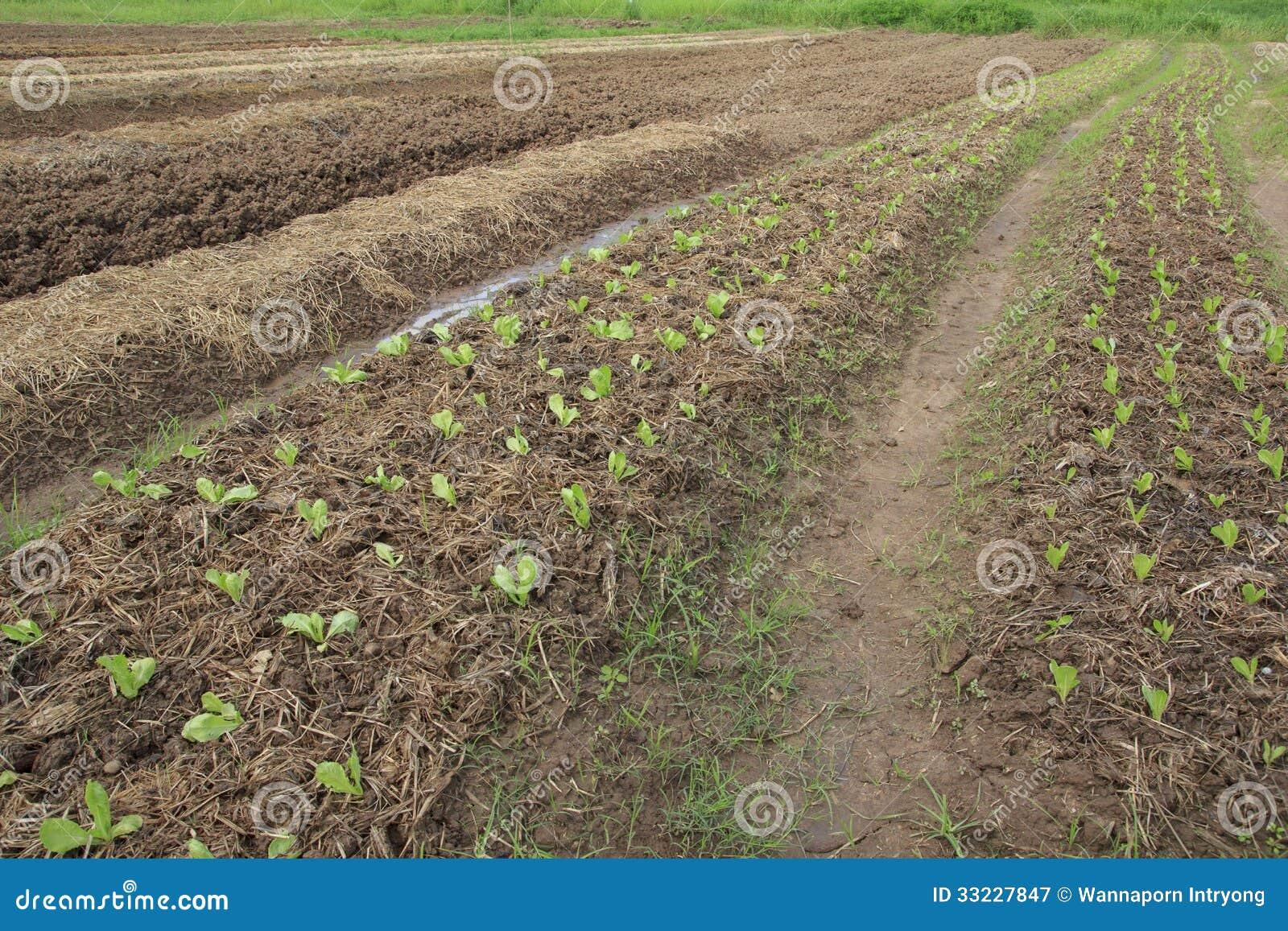 Plantaardig landbouwbedrijf
