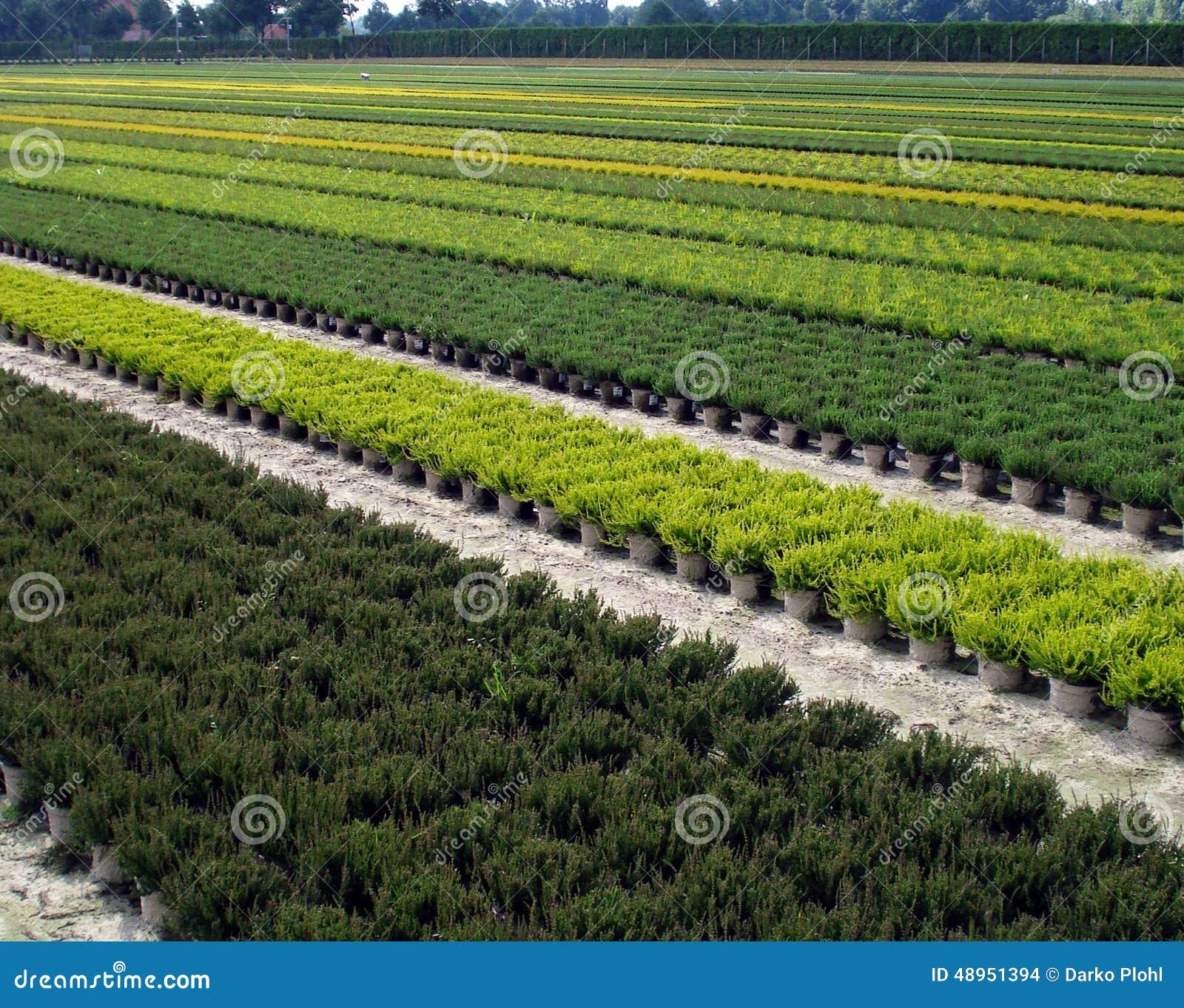 Plantaci n de arbustos ornamentales y rboles foto de for Arbustos ornamentales