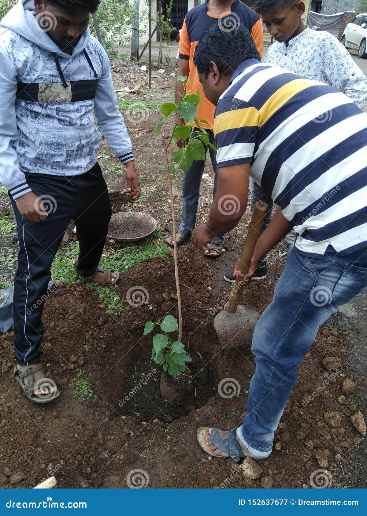 Plantación del árbol en áreas próximas