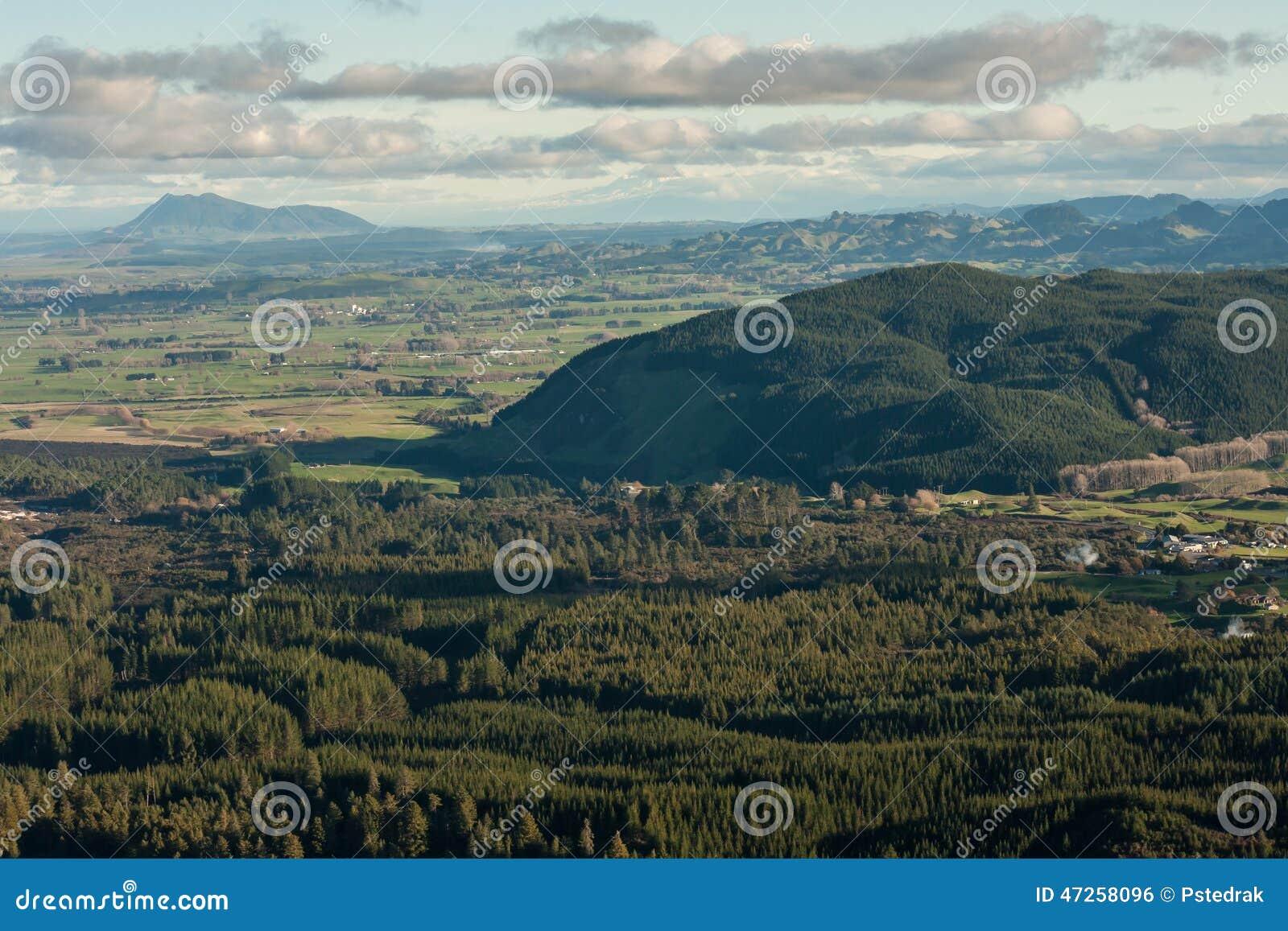 Plantaciones del bosque en Rotorua