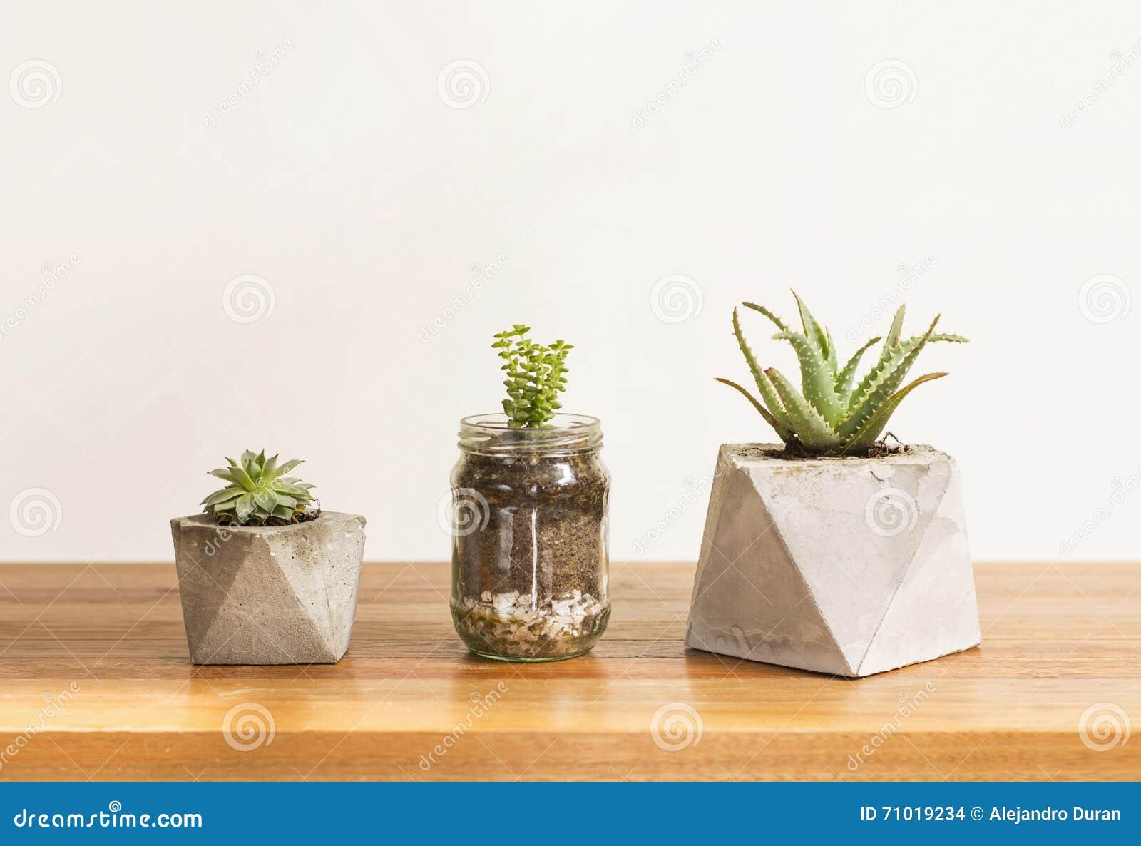 Plantadores concretos suculentos