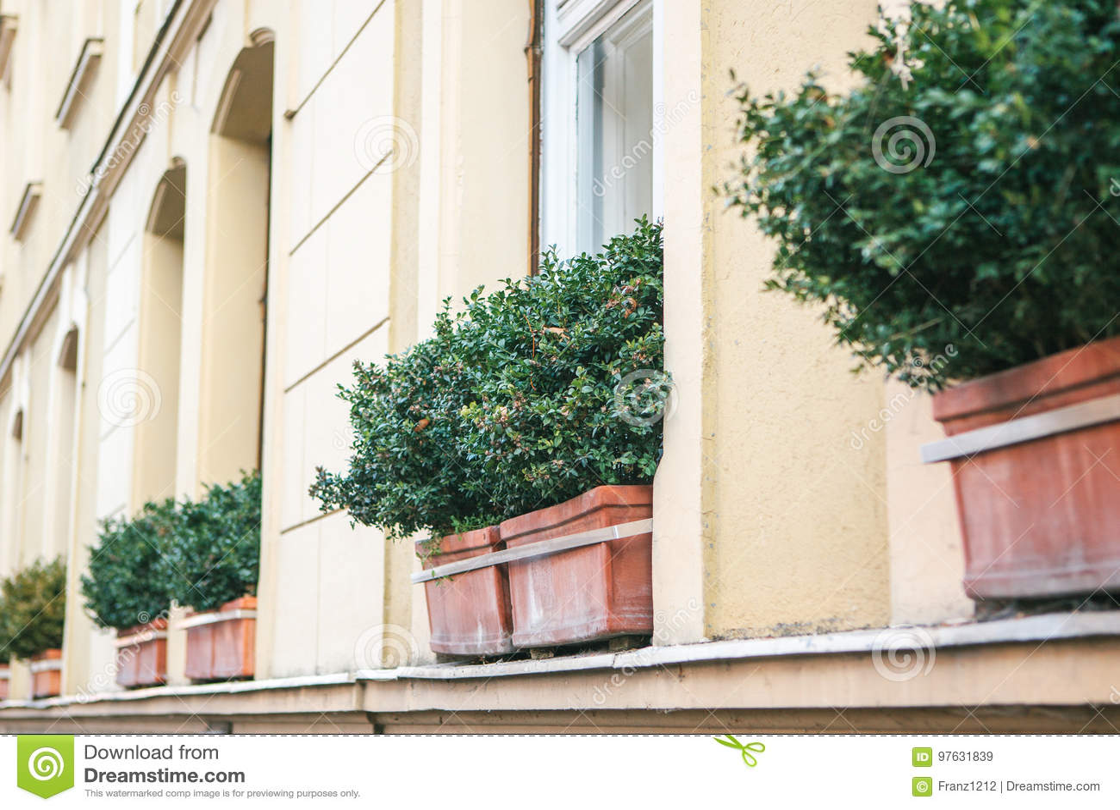 Plantas decorativas exterior fabulous plantas decorativas for Plantas decorativas de exterior