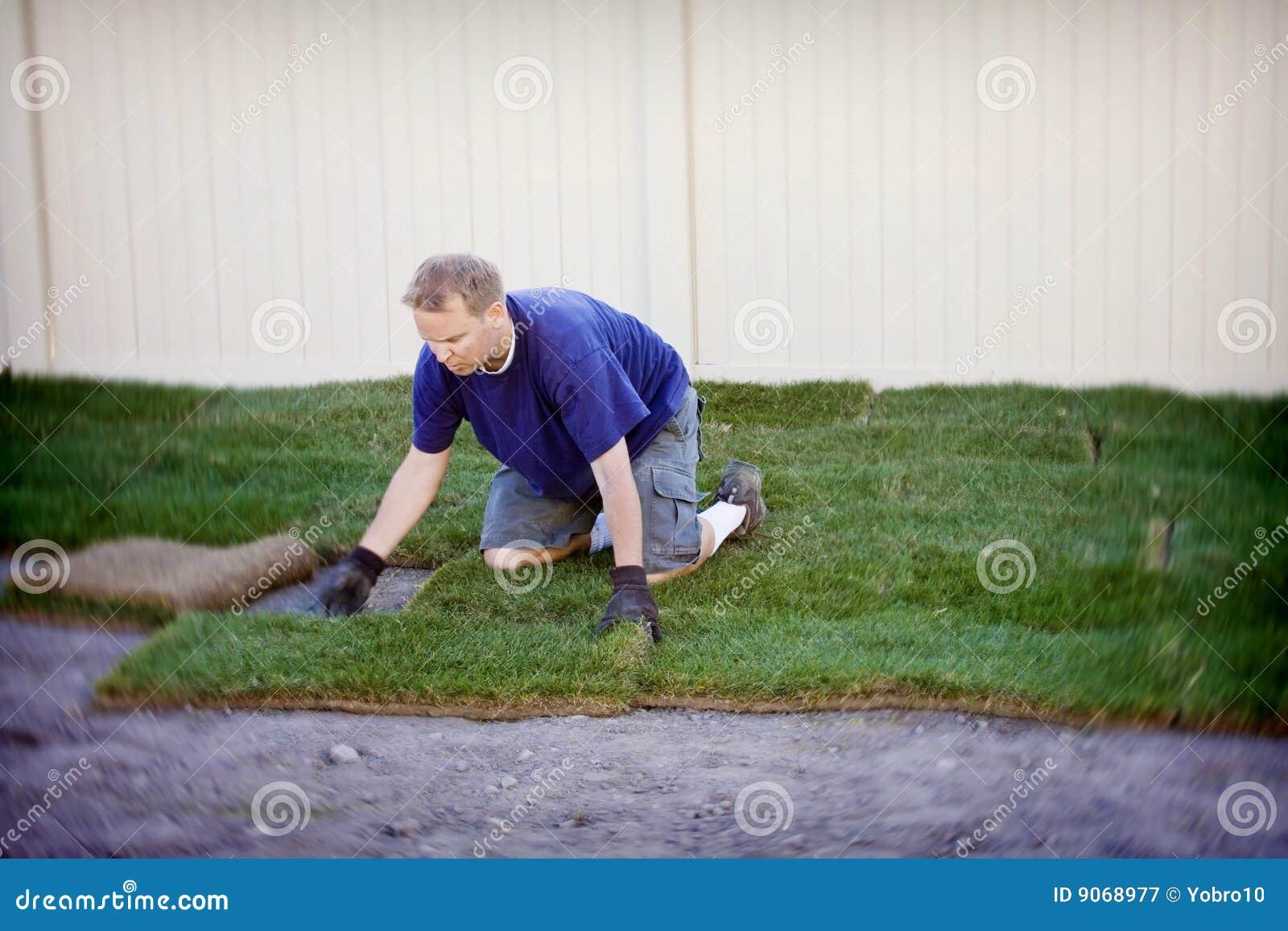 Plantando a grama nova do Sod