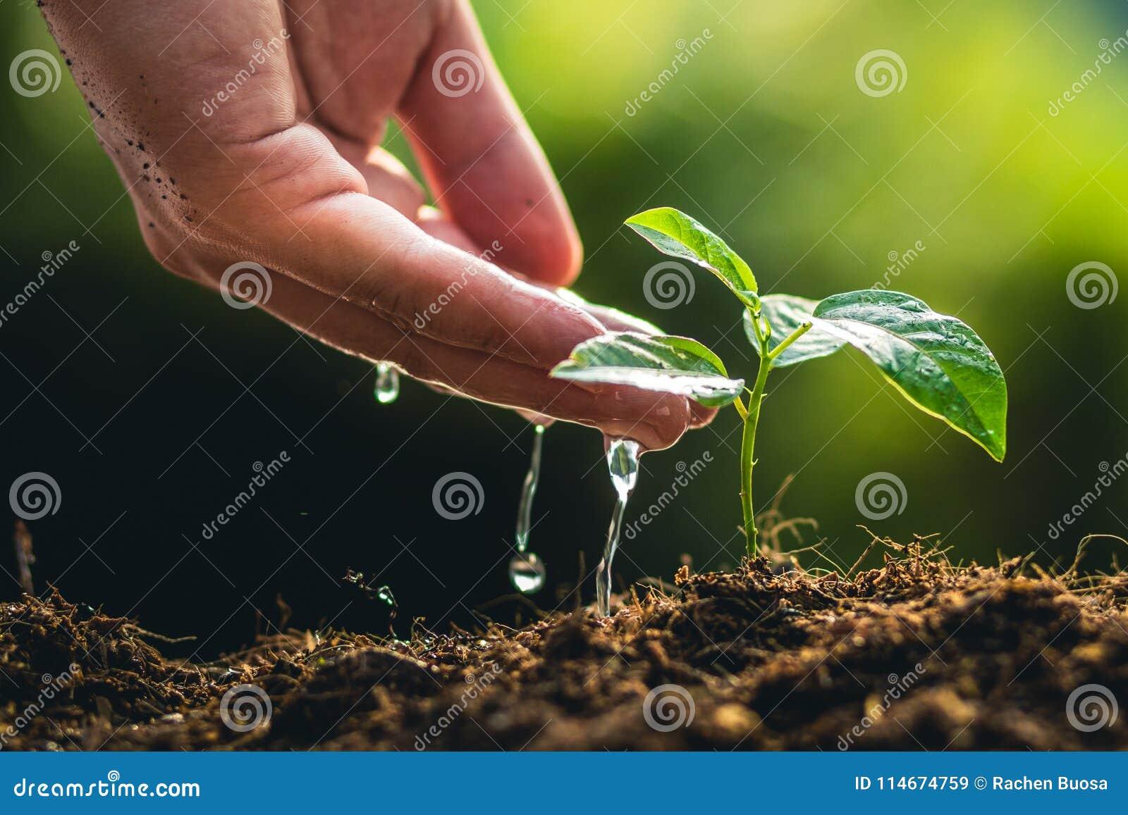 Plantando o fruto e a mão de paixão do crescimento das árvores que molham na luz e no fundo da natureza
