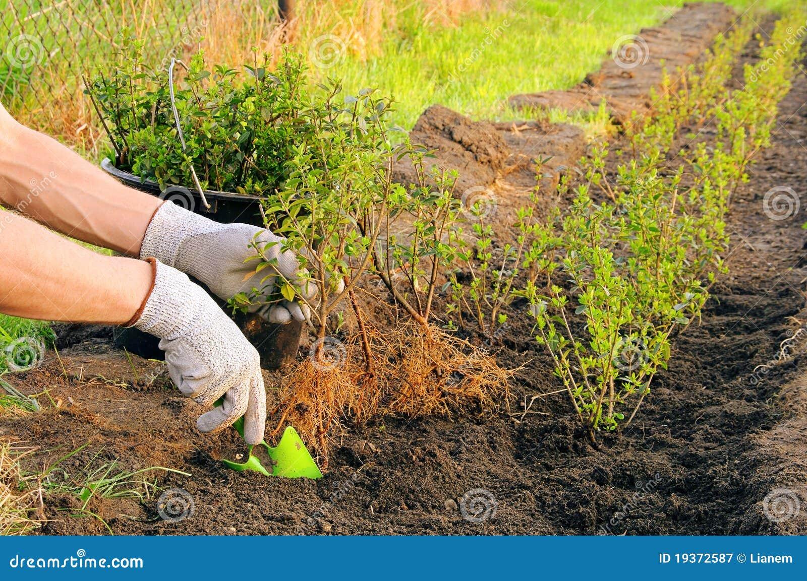 Plantando uma conversão