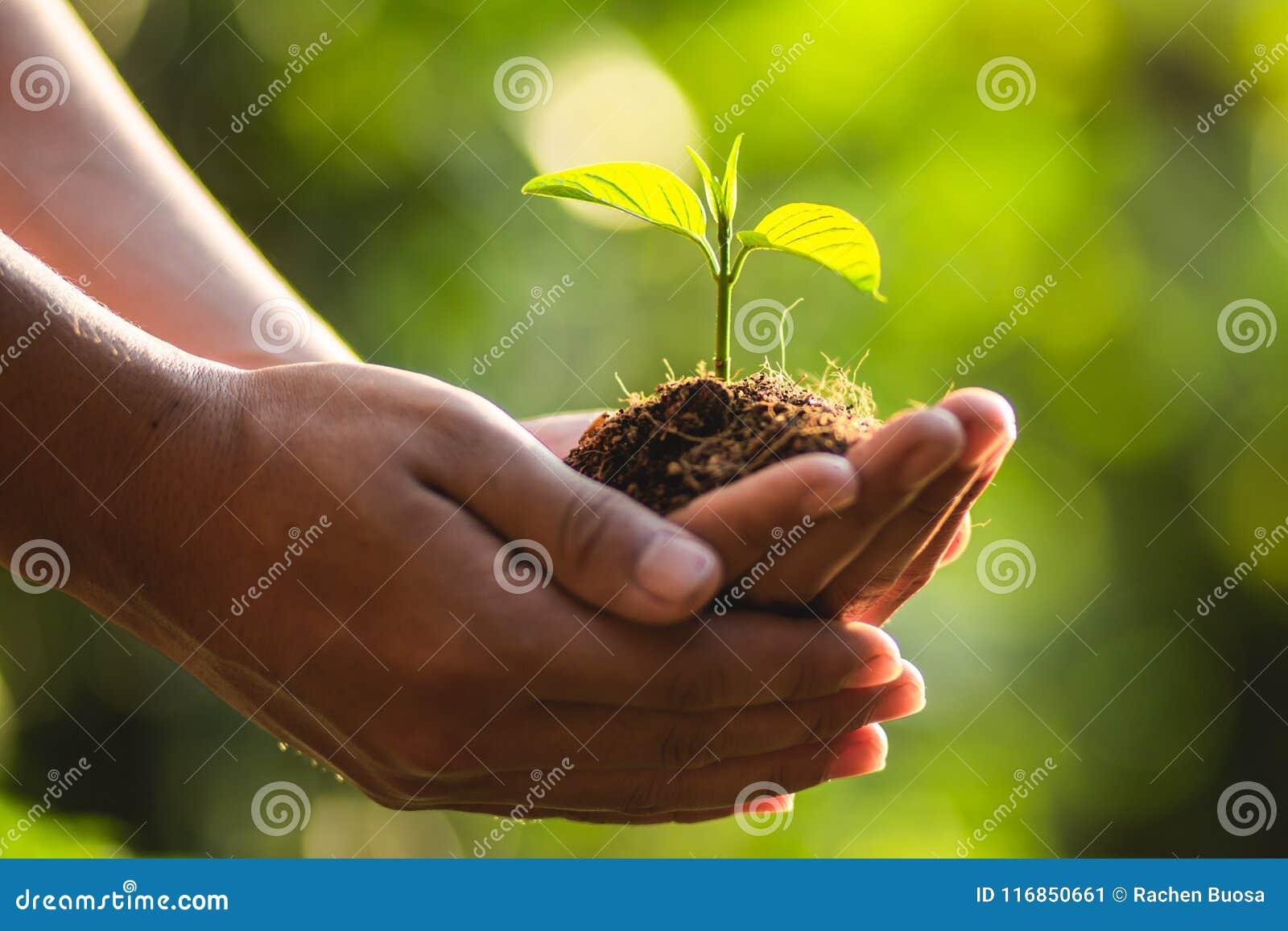 Plantant le monde d économies de soin d arbre d arbres, les mains protègent les jeunes plantes dans la nature et la lumière de la