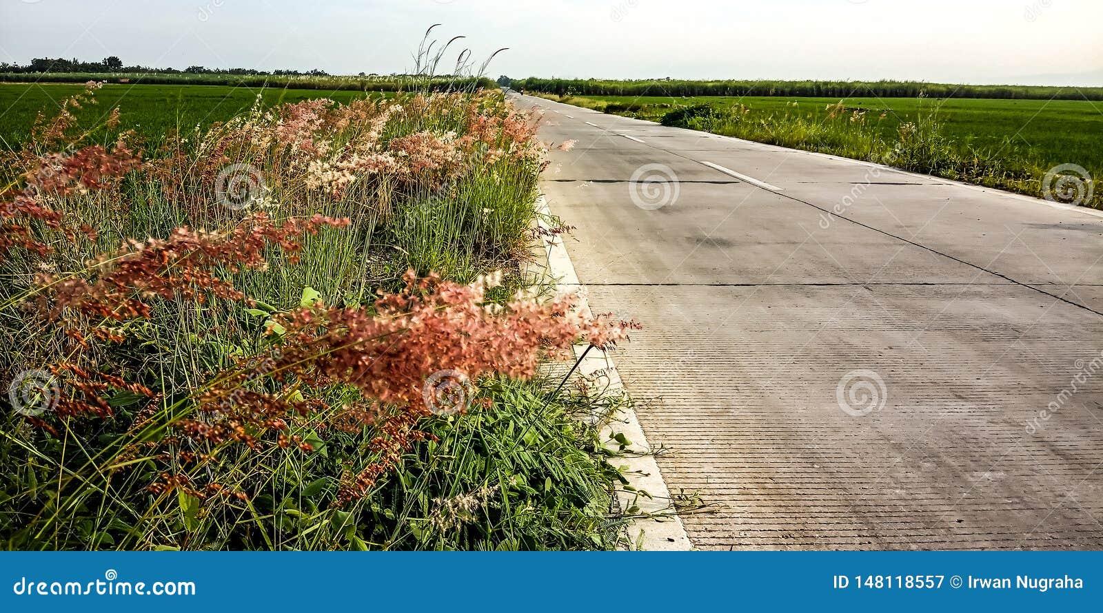 Plantas al lado de los campos del camino y del arroz