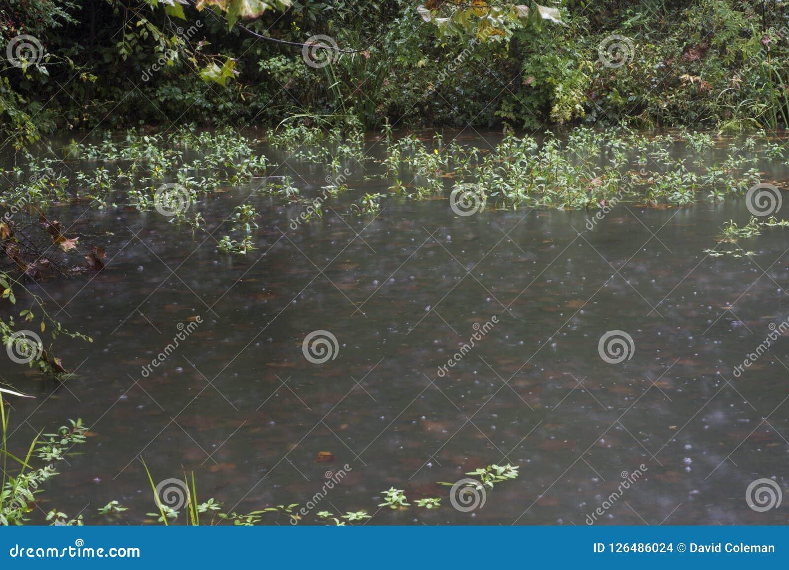 Plantas aquáticas na chuva
