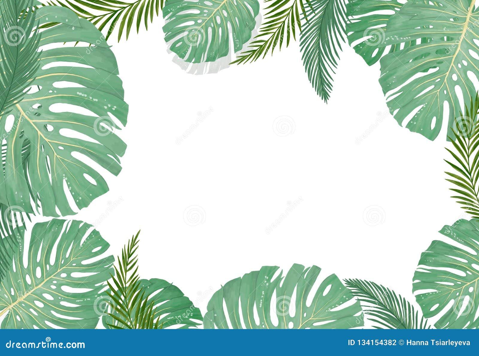 Plantas botânicas tropicais, fundo com as folhas do coco e folha da selva do cartão do projeto da banana no fundo branco