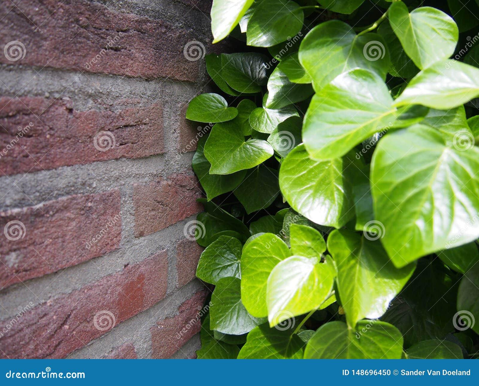 Plantas contra a parede, a luta!
