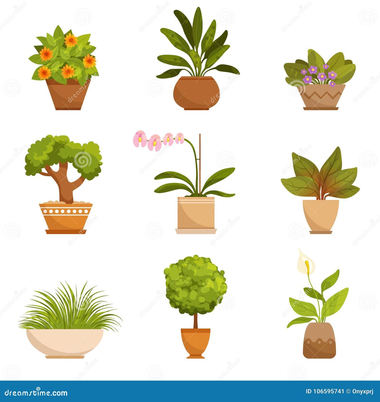 Plantas da casa flores decorativas dentro ilustra es do for Plantas decorativas hidroponicas