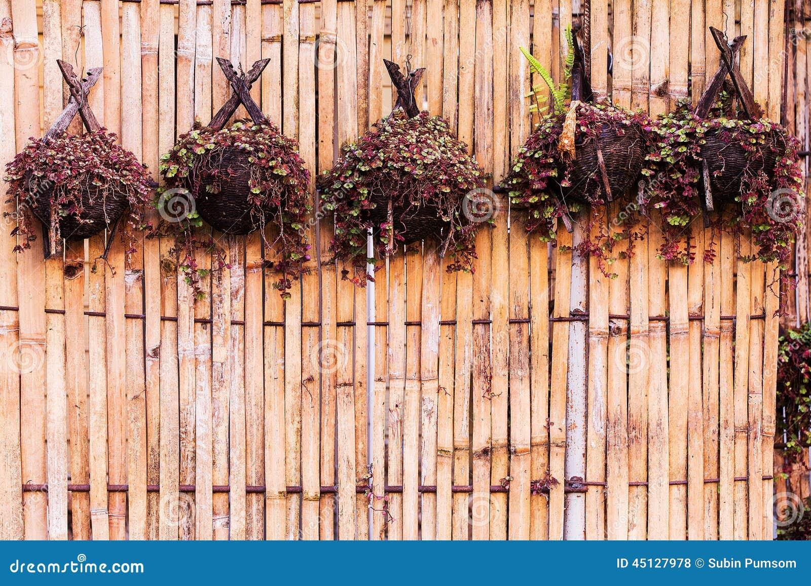 Plantas de bambu para pendurar foto de stock imagem de janela velho 45127978 - Bambu planta exterior ...