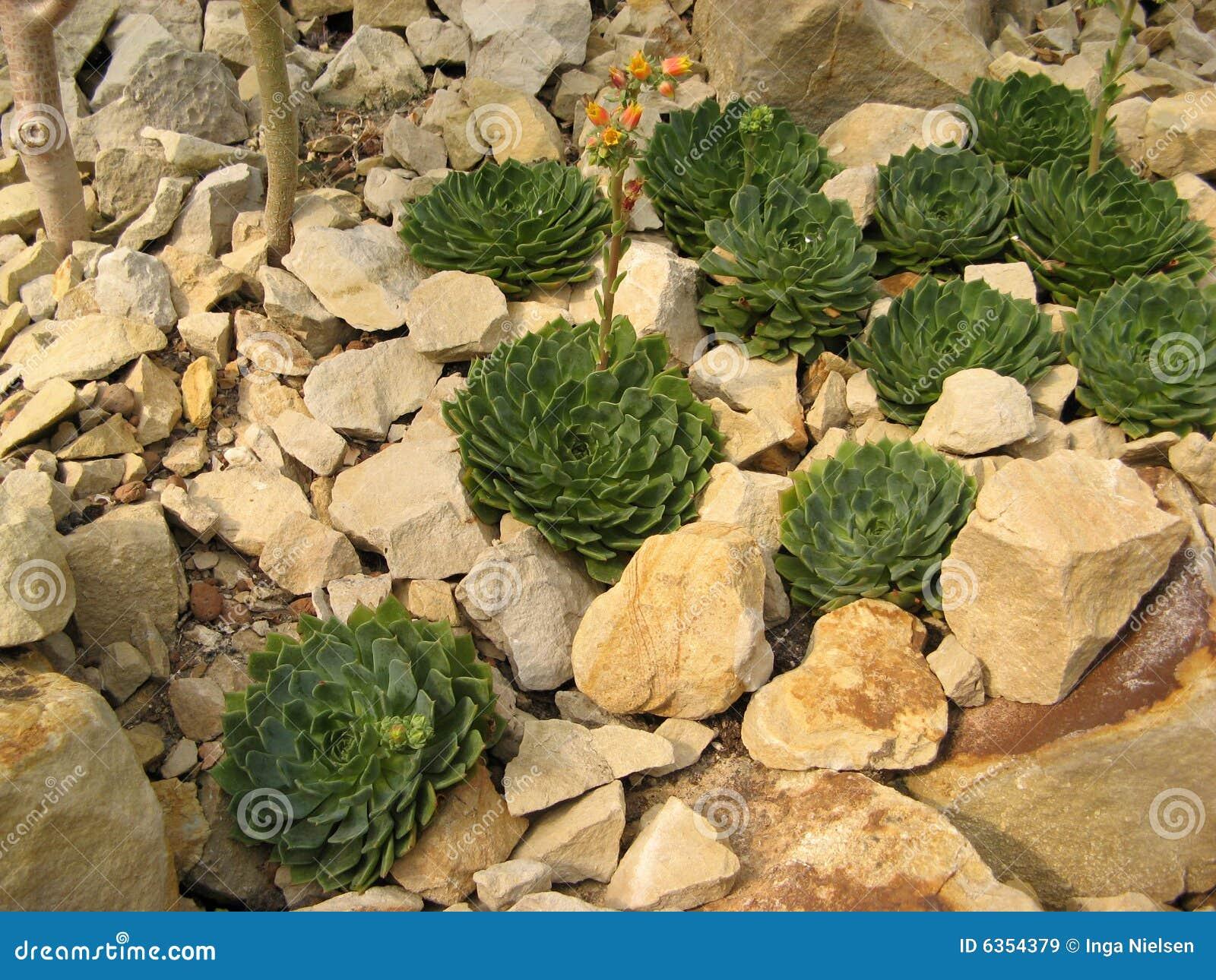 Plantas De Desierto Imágenes de archivo libres de regalías  Imagen