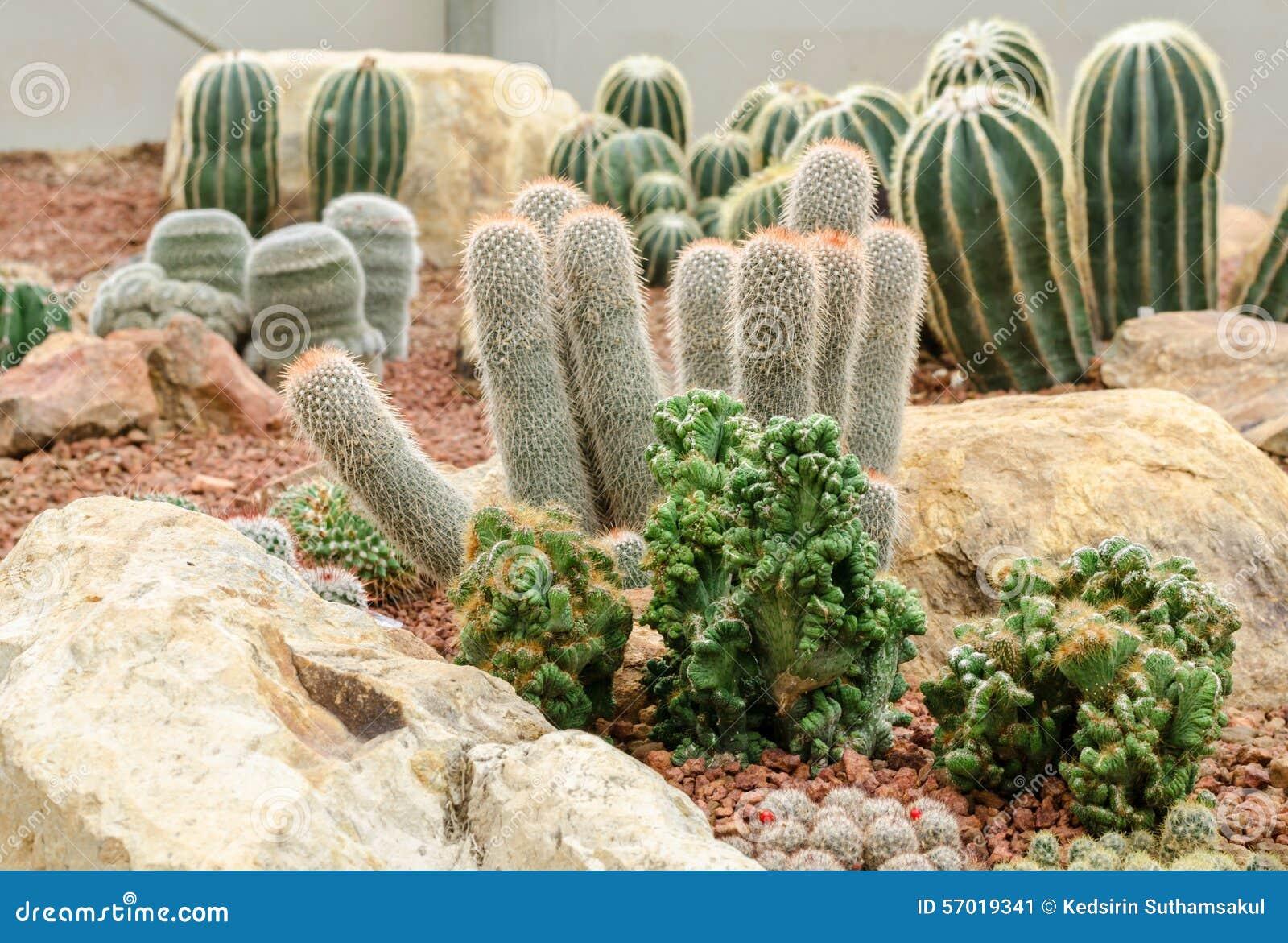 Plantas de desierto cactus en jard n imagen de archivo for Jardin del desierto