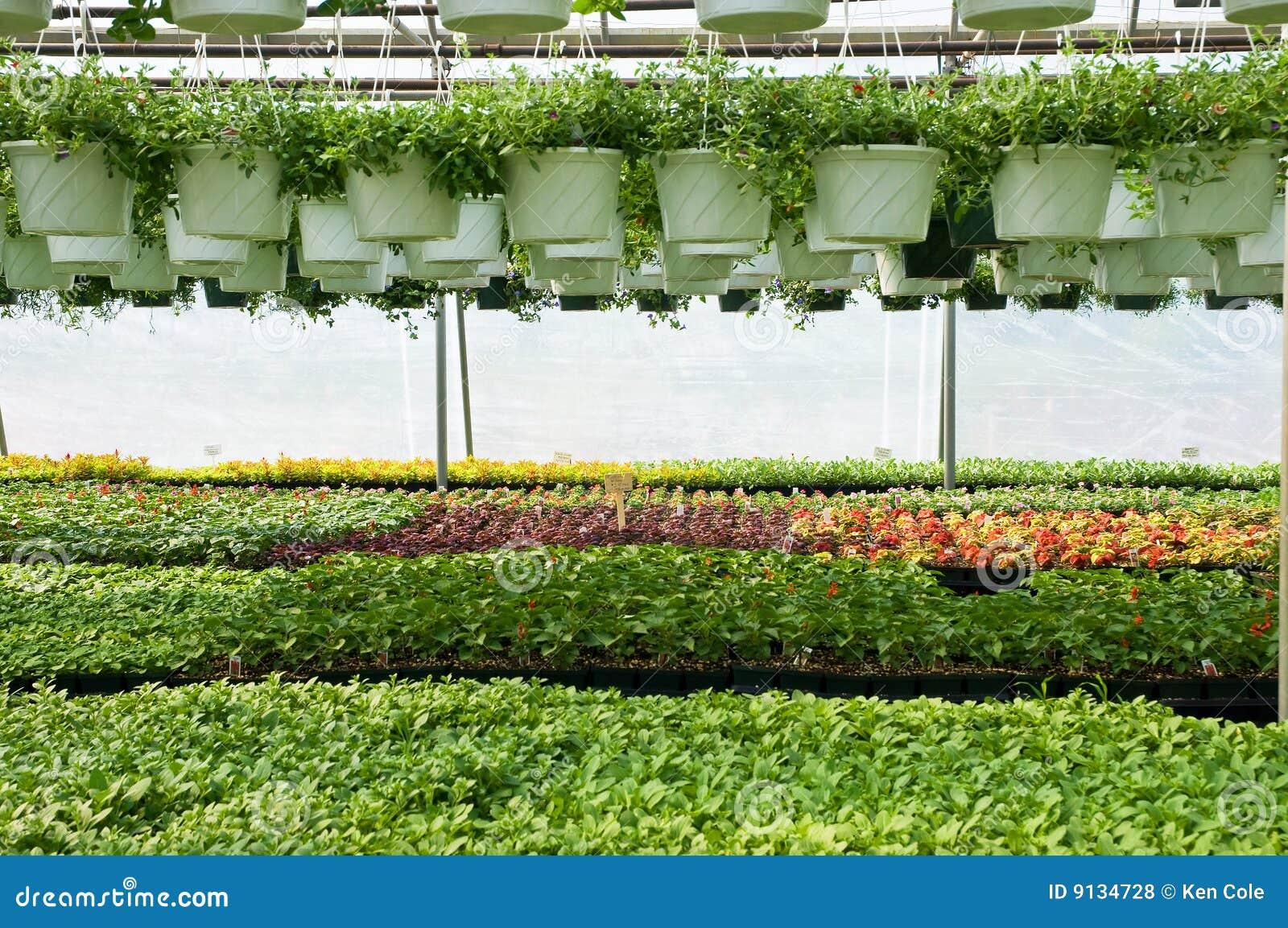 Plantas de estufa fotos de stock royalty free imagem - Foto estufa ...