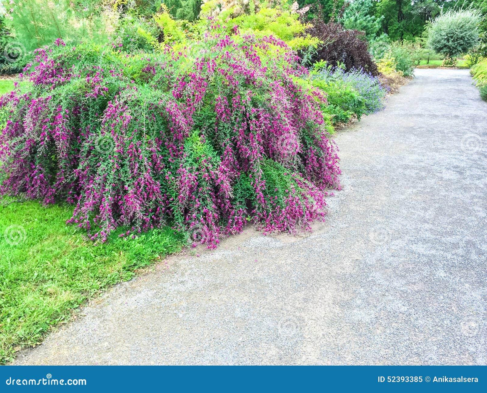 flores para jardim verao : flores para jardim verao:Plantas De Florescência Bonitas No Jardim Do Verão Foto de Stock