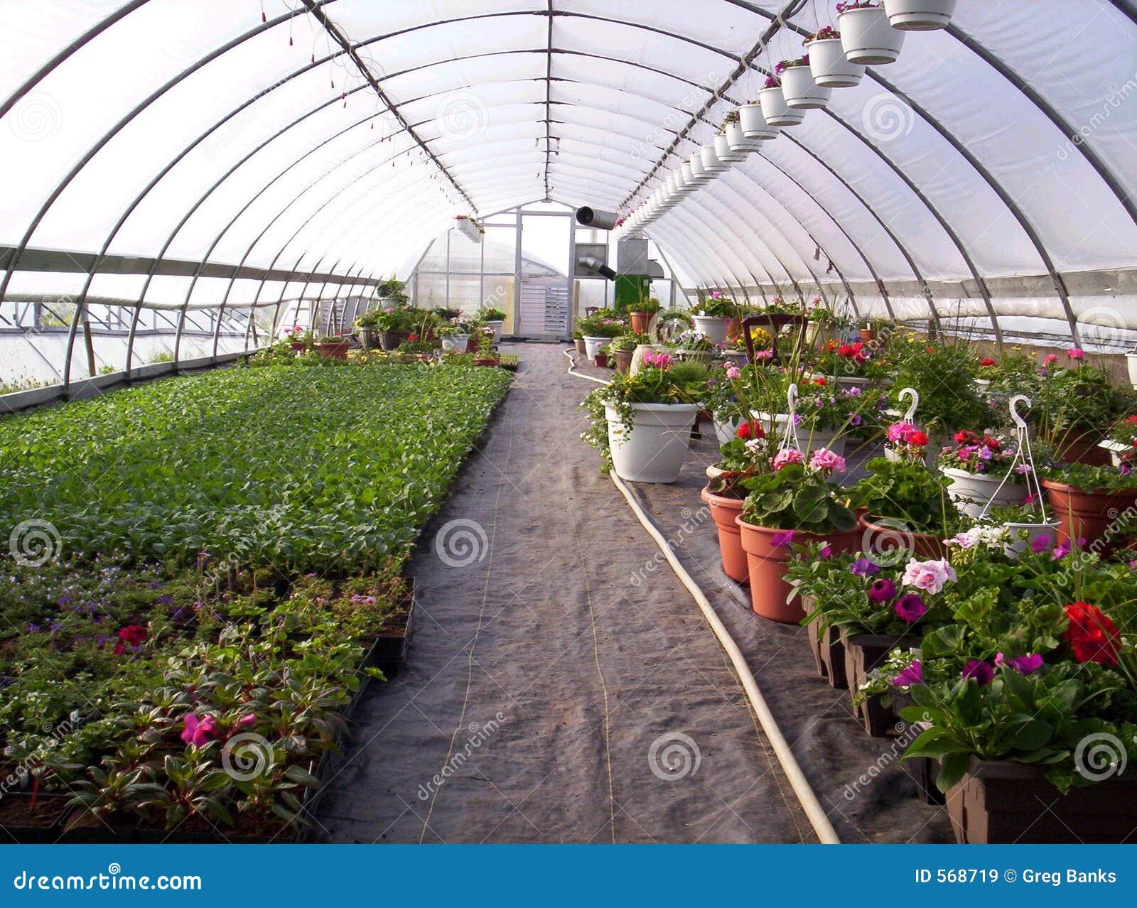 Plantas De Invernadero Imagen De Archivo Imagen De: plantas de invernadero