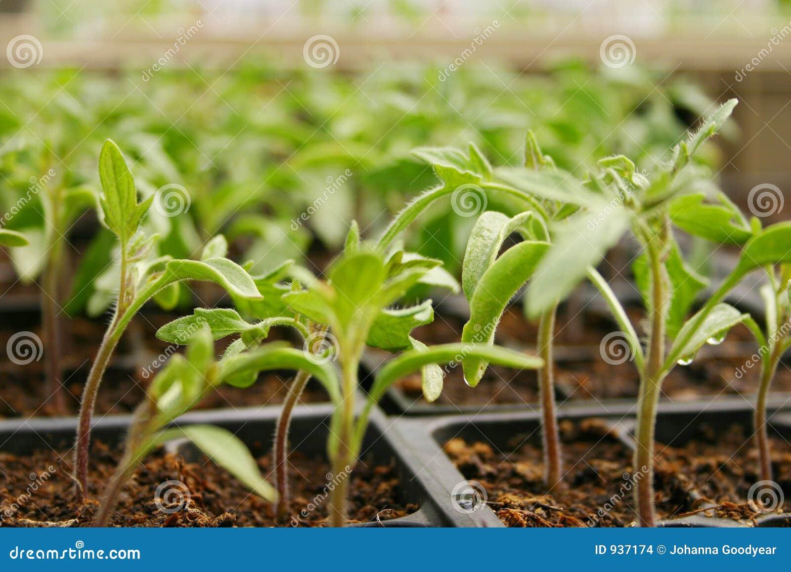 Plantas de invernadero imagenes de archivo imagen 937174 for Plantas para invernadero