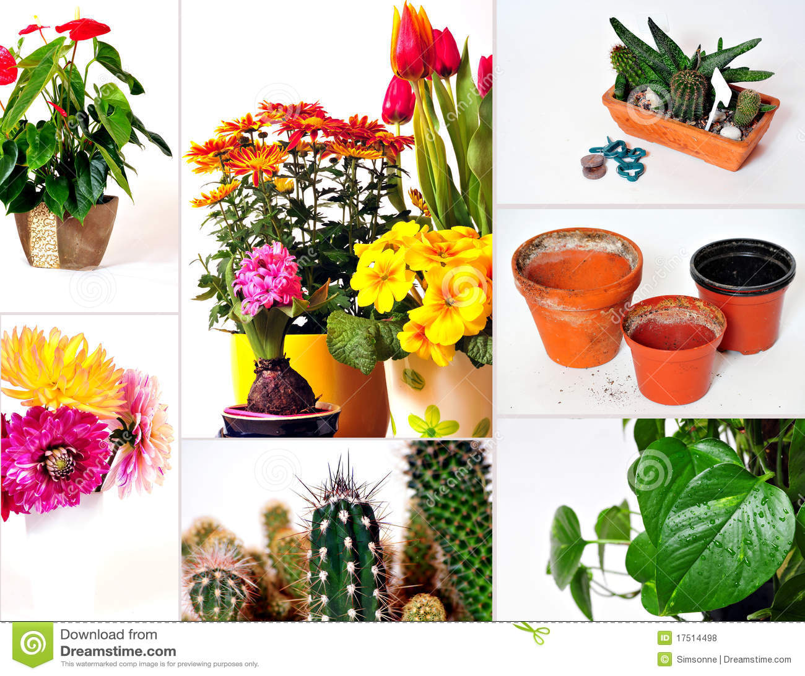 Plantas de jard n del collage fotos de archivo libres de for Ver plantas para jardin