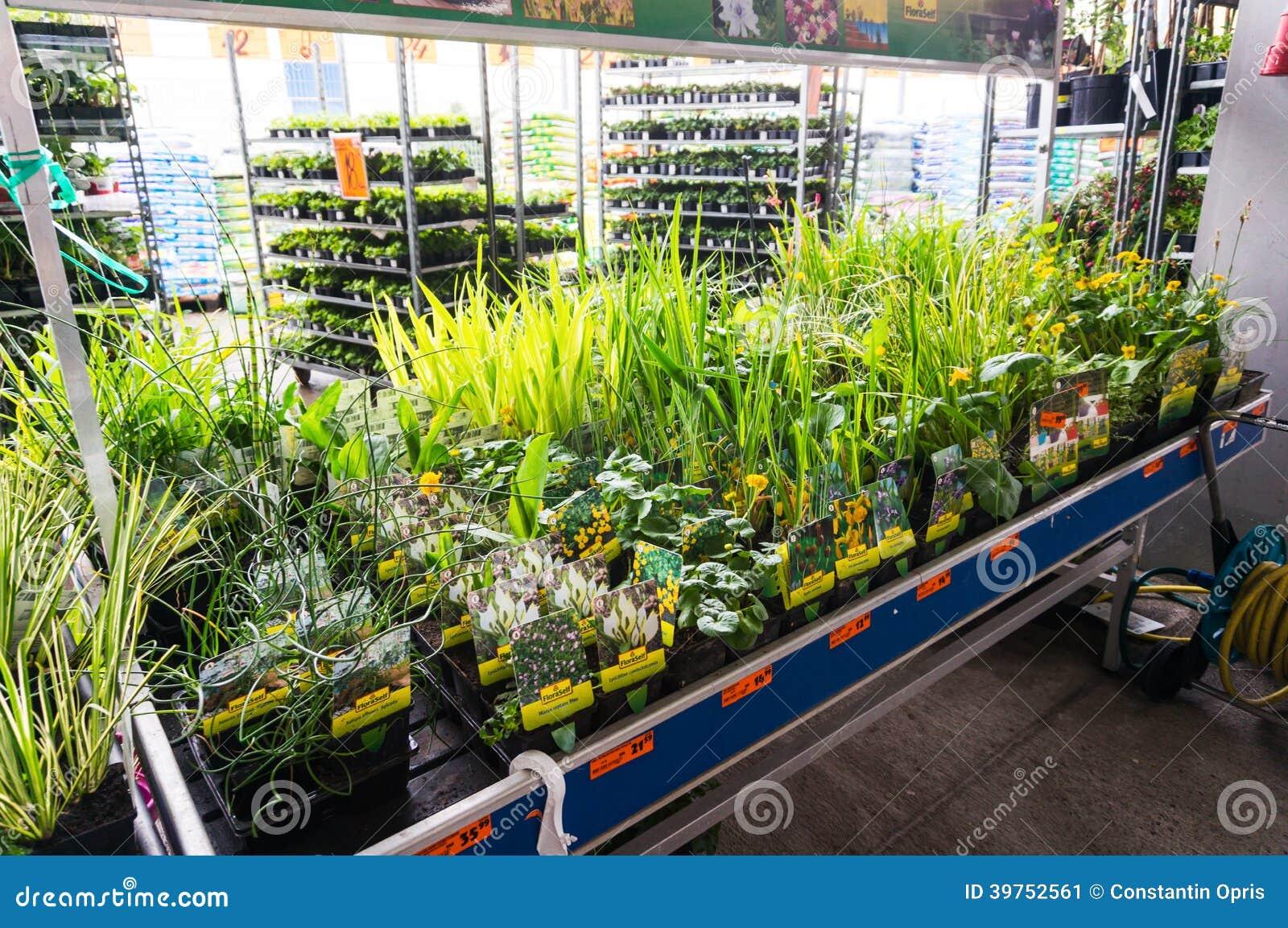 Plantas de jardim para a venda na loja de Hornbach, Romênia