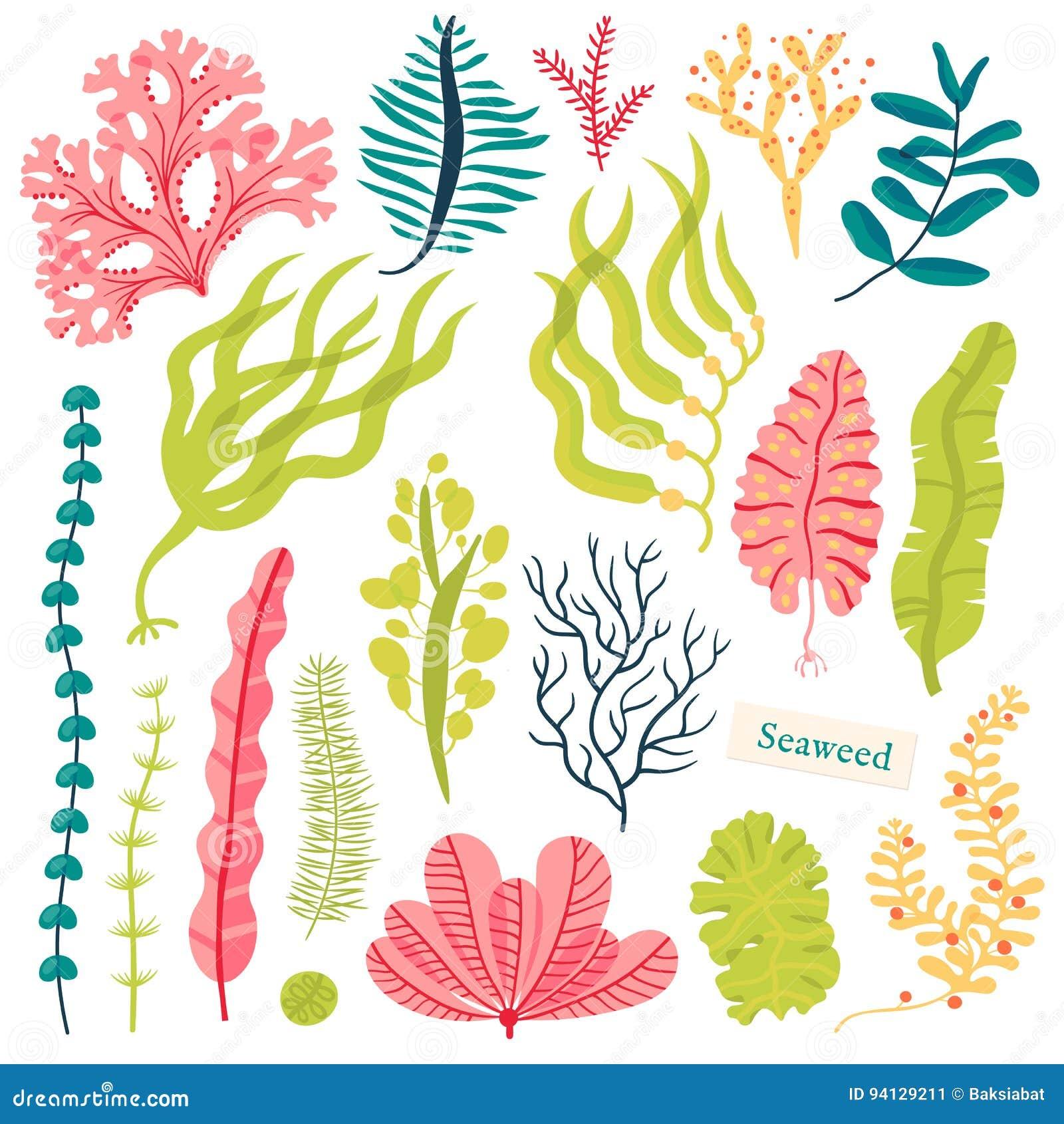 Plantas De Mar E Algas Marinhas Aquaticas Ilustracao Ajustada Do