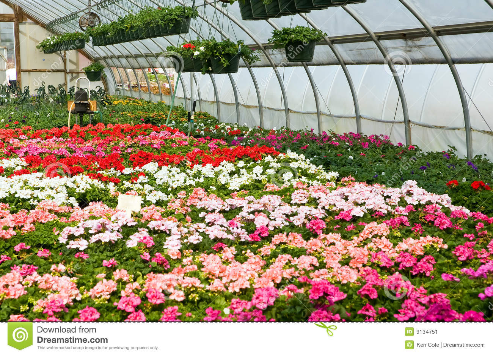 imagenes de plantas de invernadero