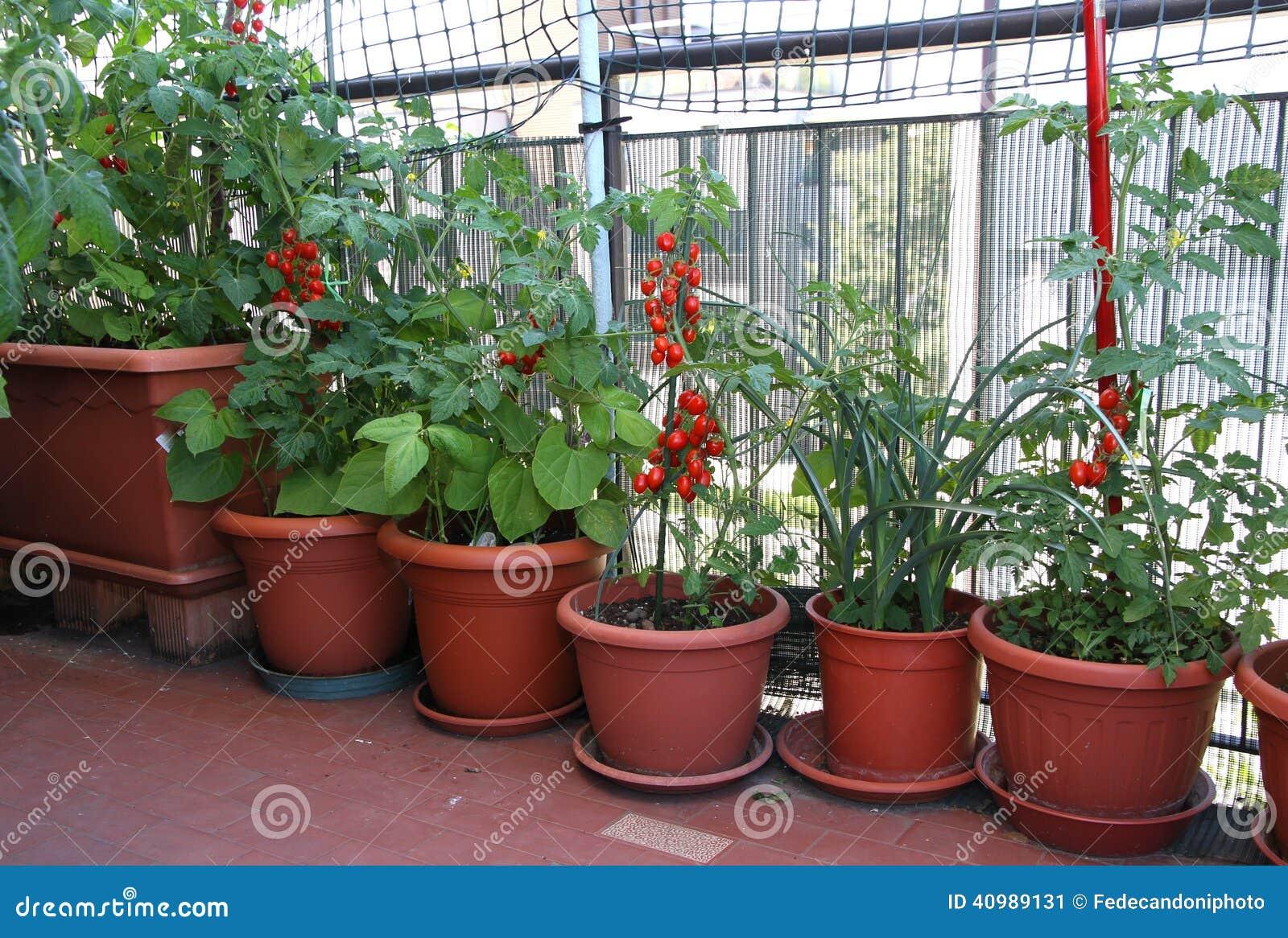 Plantas de tomate en la terraza del apartamento en la - Plantas terraza ...
